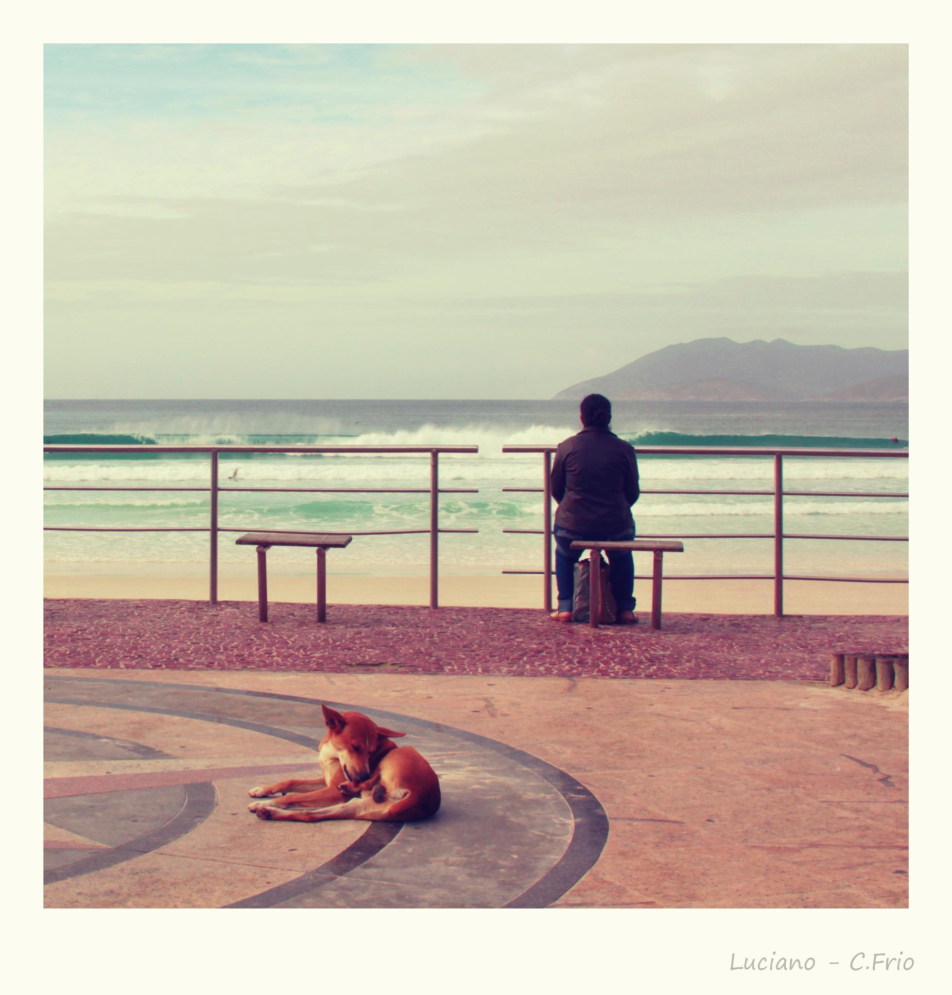 The dog, woman and ocean. by Barbosa