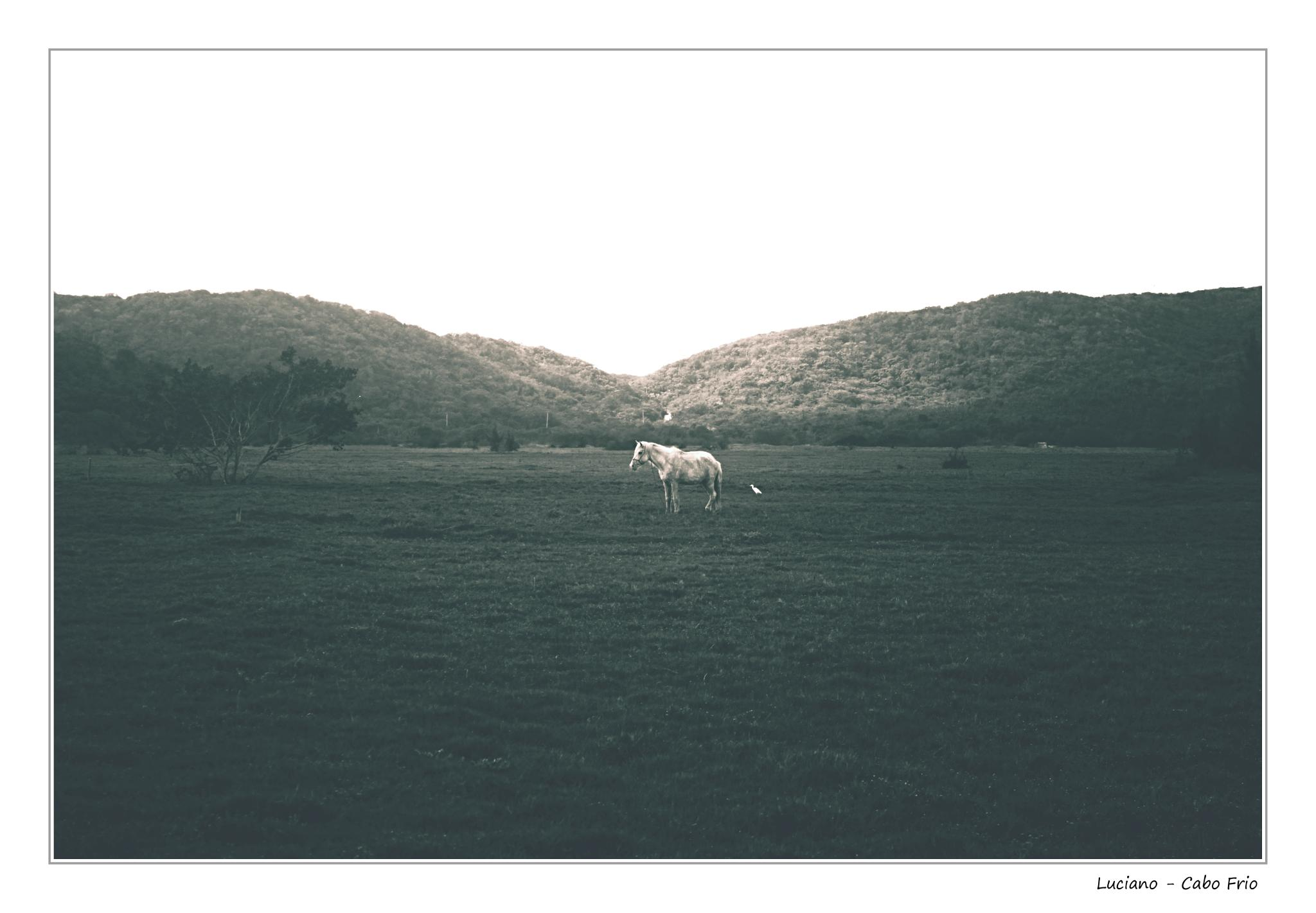 White horse by Barbosa