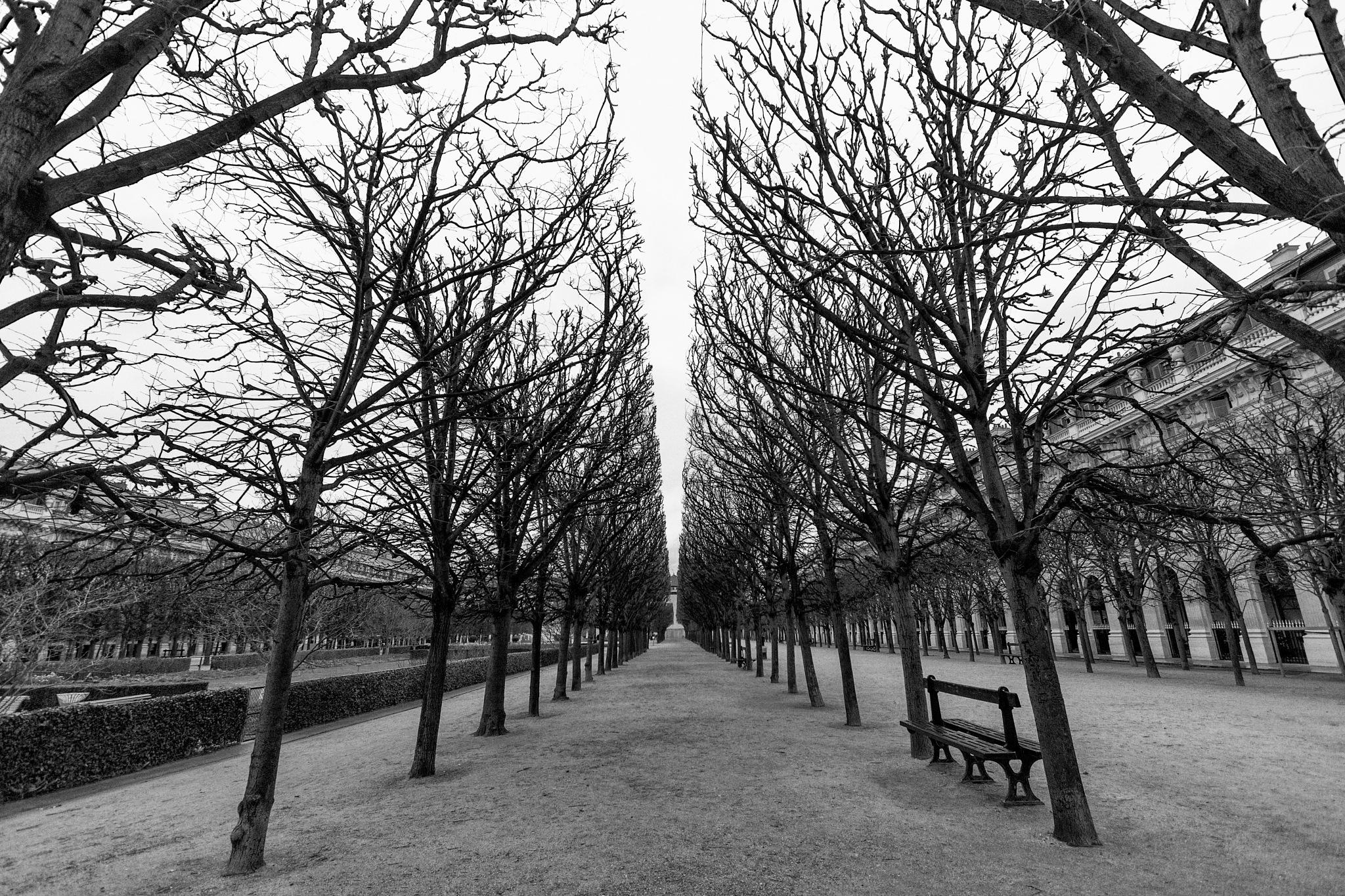 Tuillerie Garden by monicacfotografia