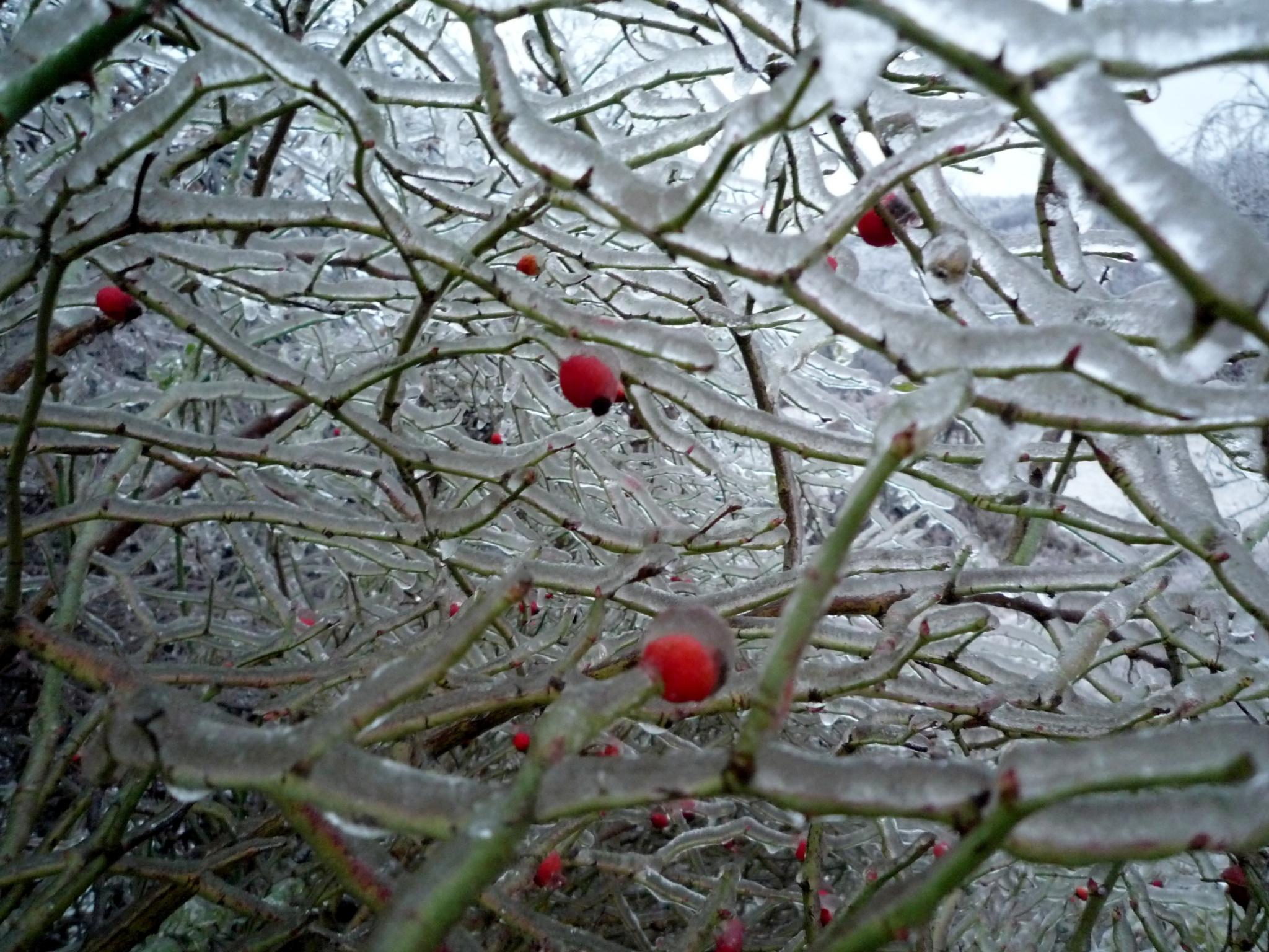Frozen by Stefani