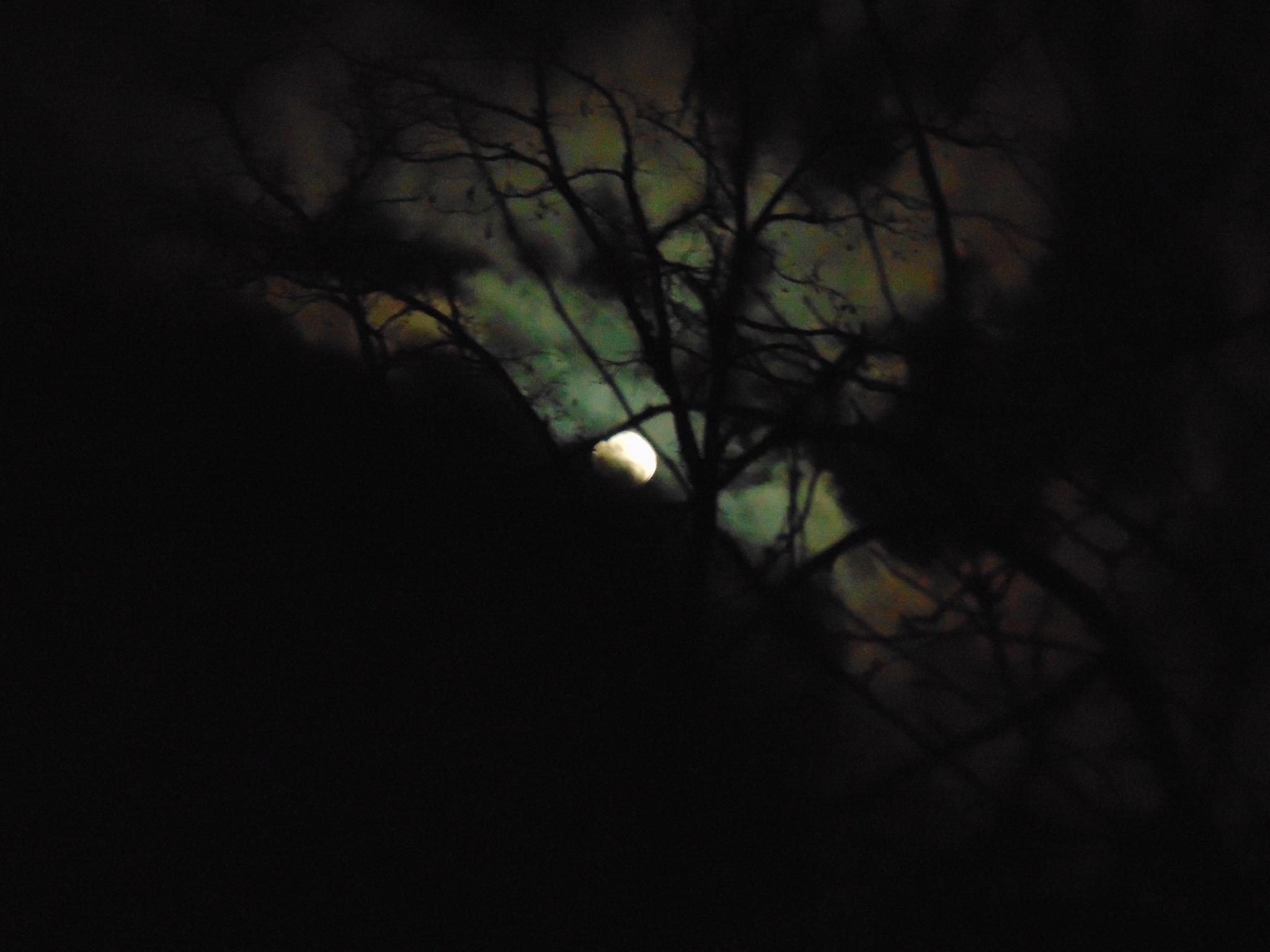Night sky by Stefani