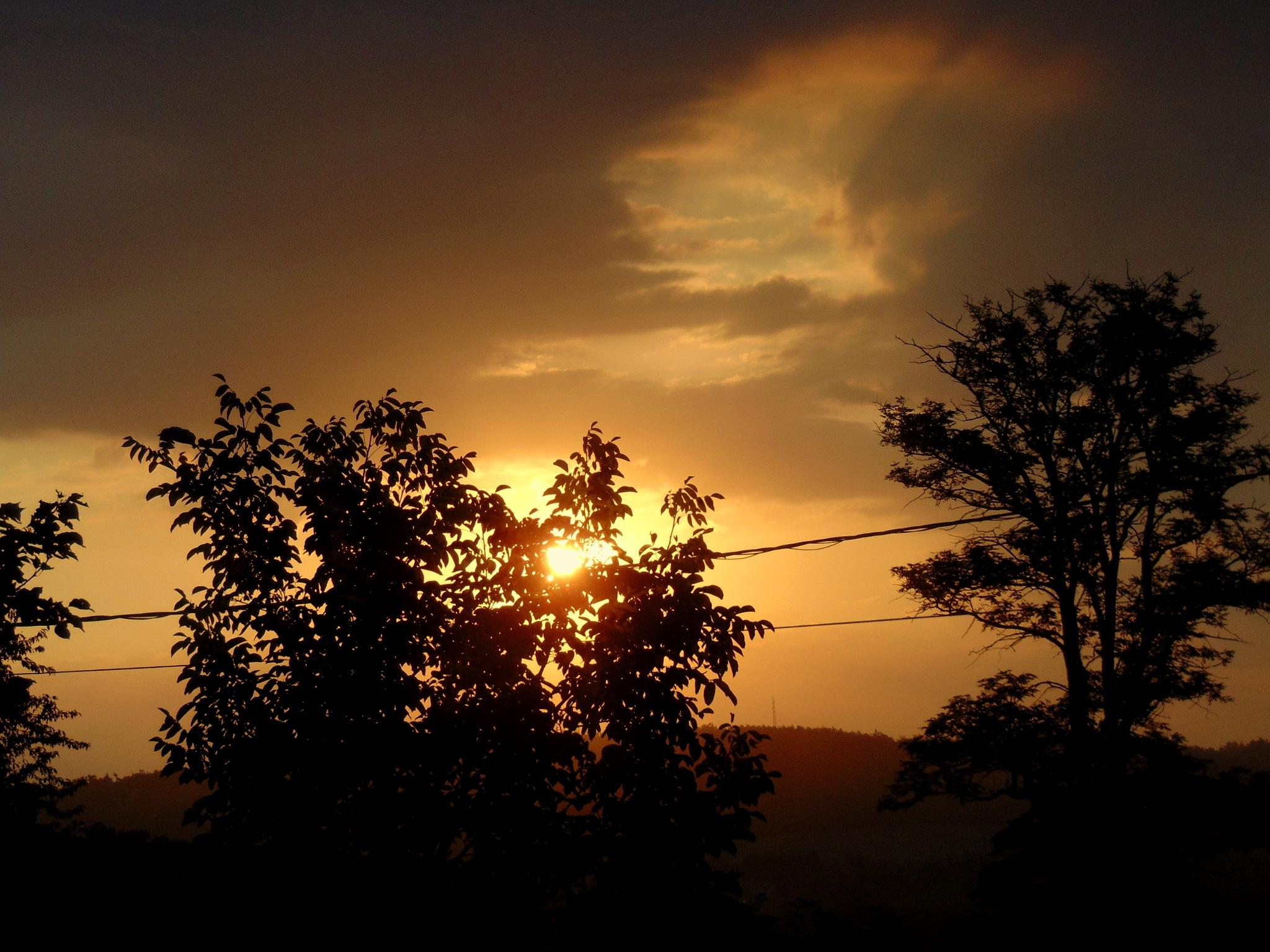 Morning, sunshine by Stefani
