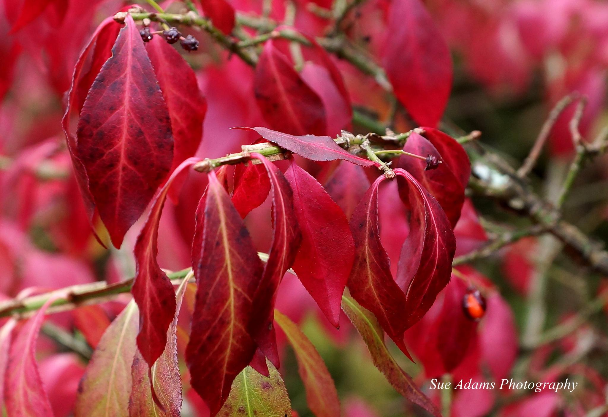 Autumn Leaves by Sue Adams Photography