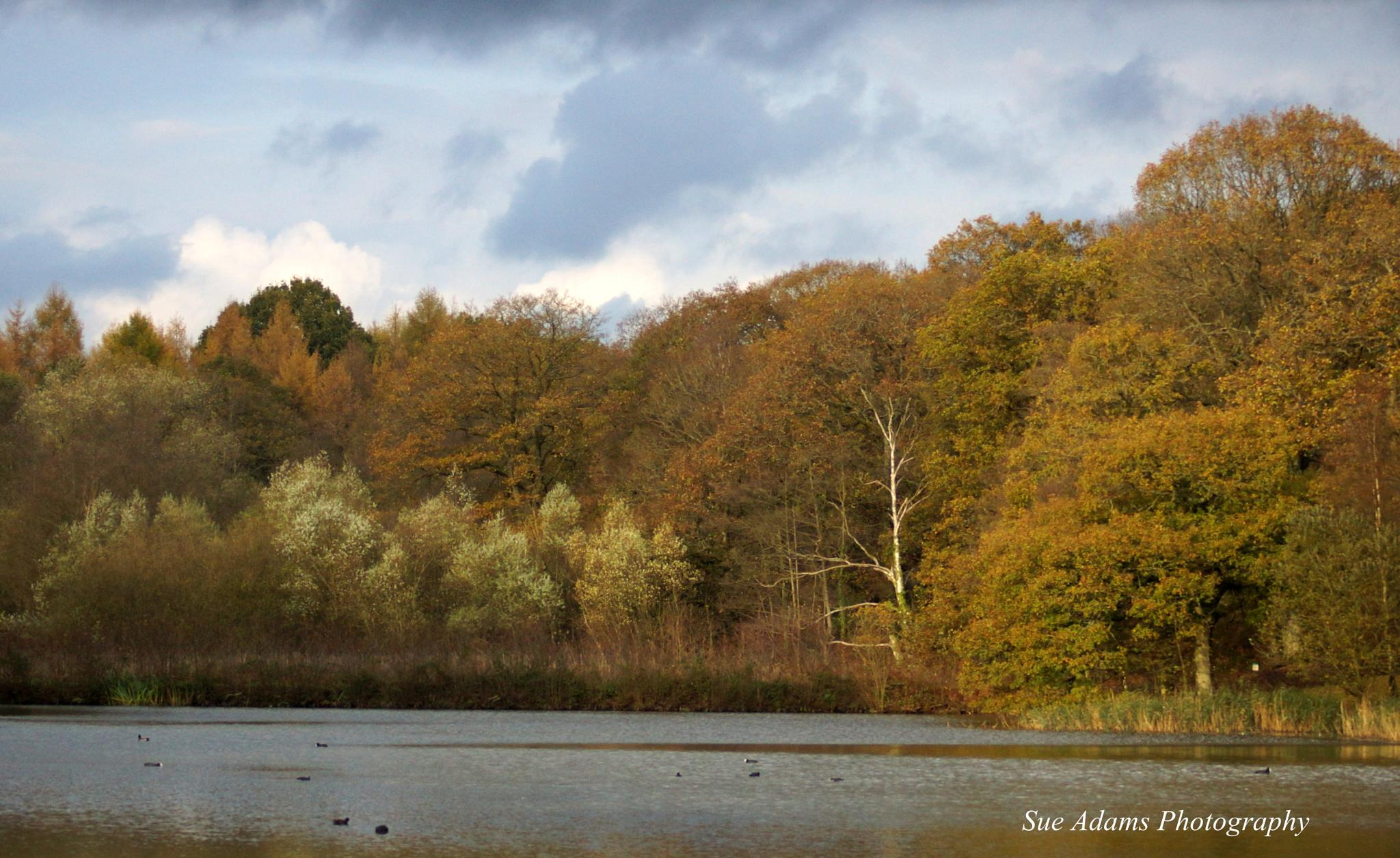 Autumn Pond by Sue Adams Photography