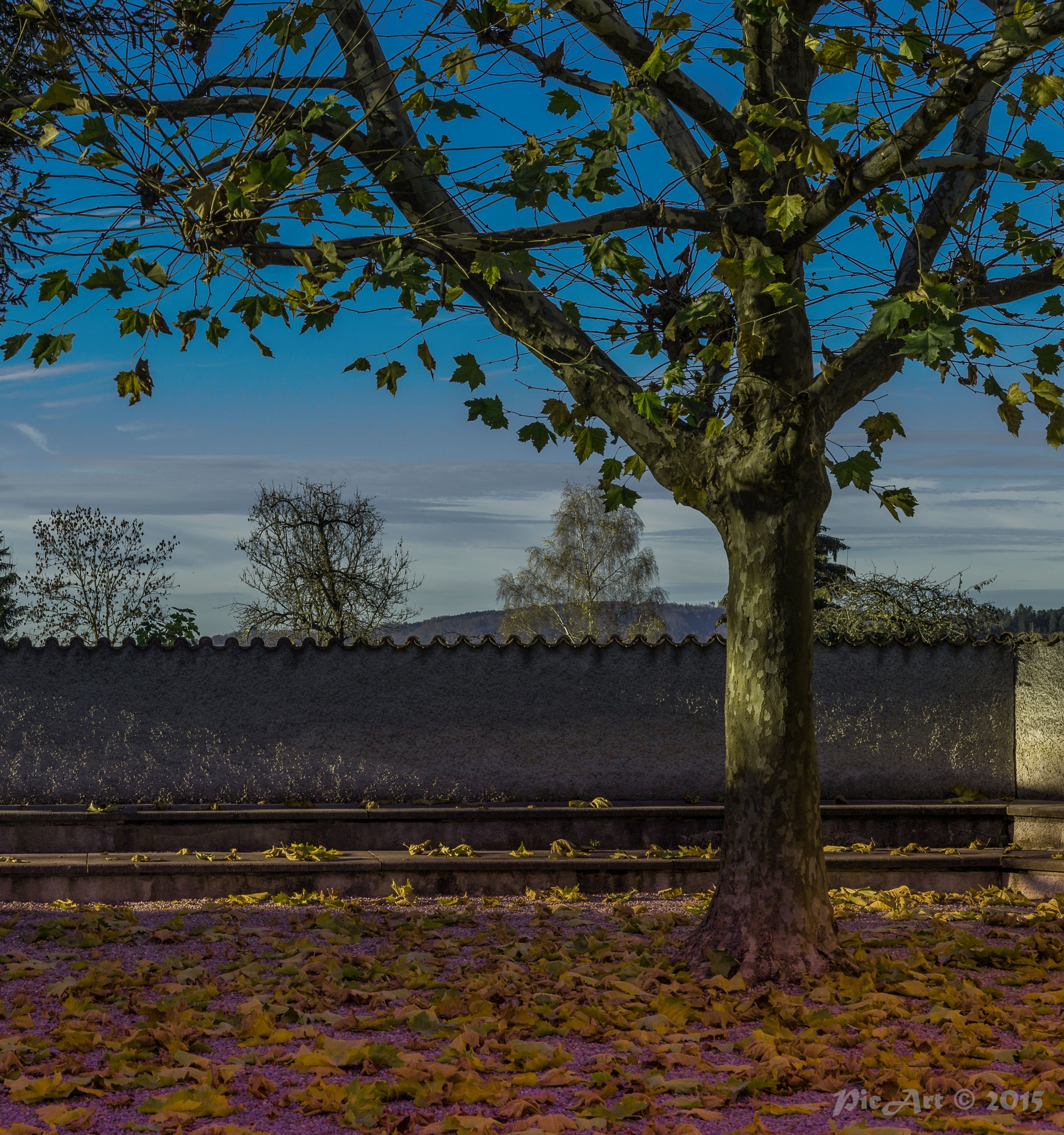 Falling Leaves by  Spengler