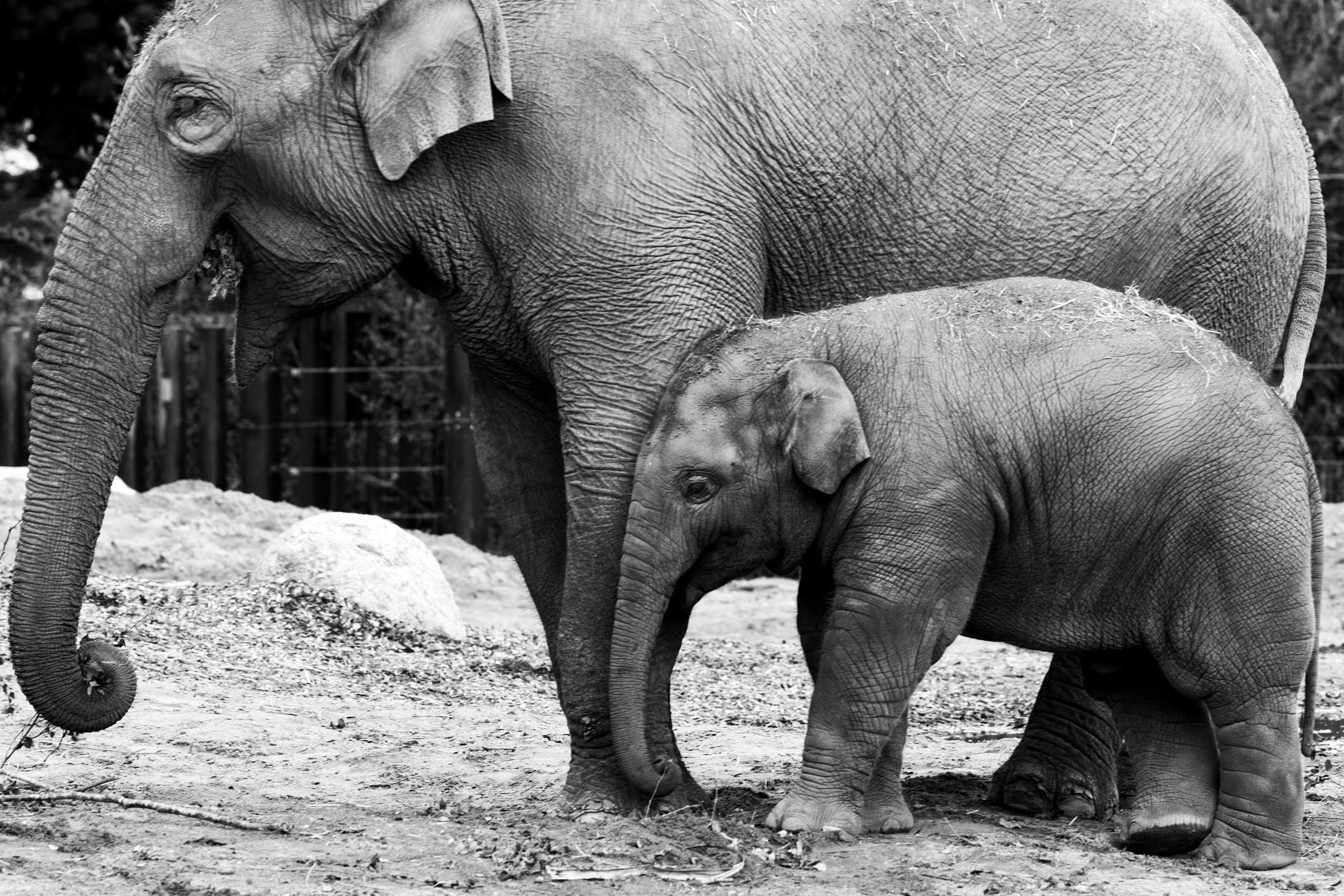 Elephant cuddle by Sinead