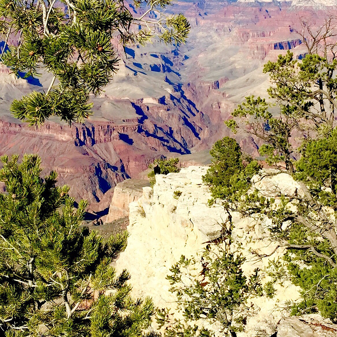 Grand Canyon views  by Mary Taylor