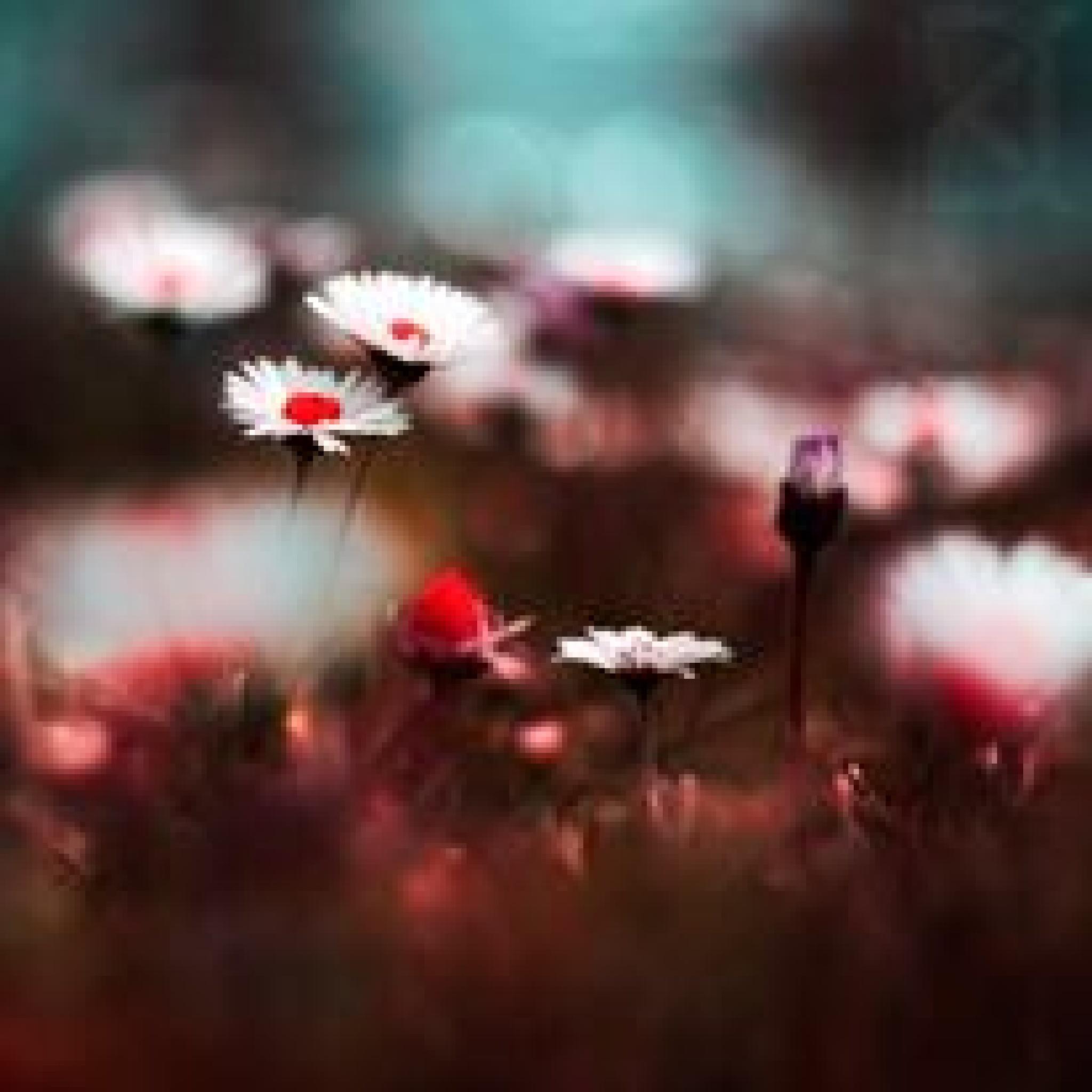 Untitled by Gayane Nadiryan