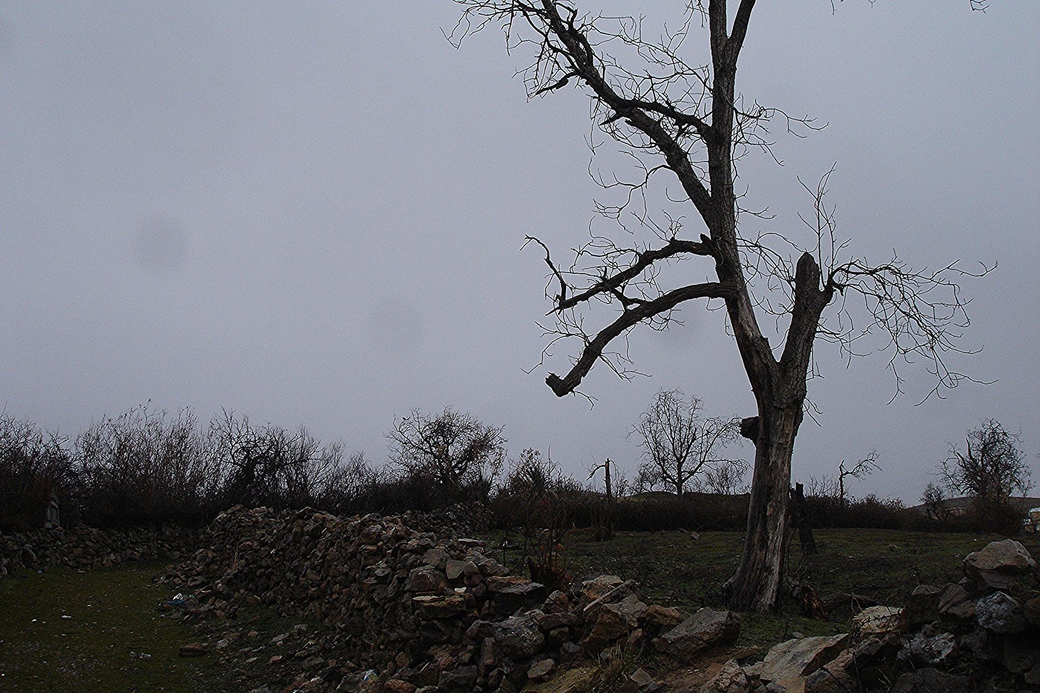 tree by hadidadar408