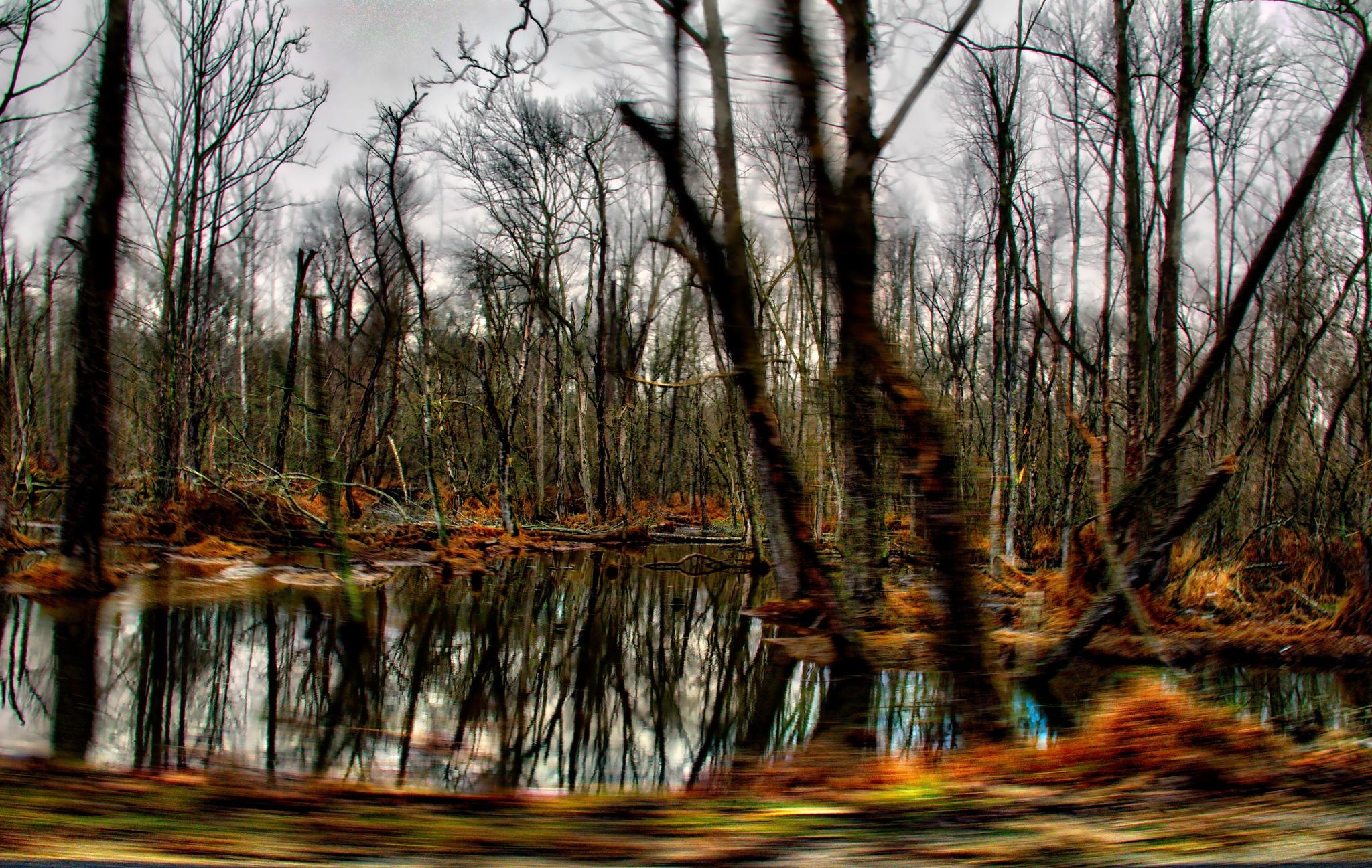"""Blurred Swamp"" by Michael  C. Habina"