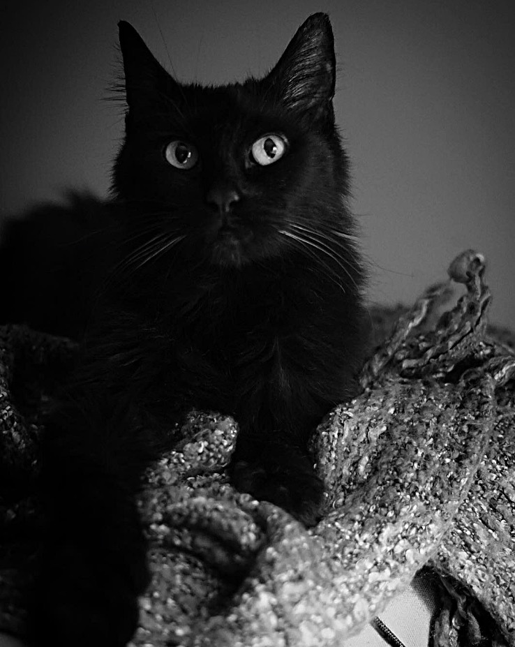 Black Cats Matter by RH