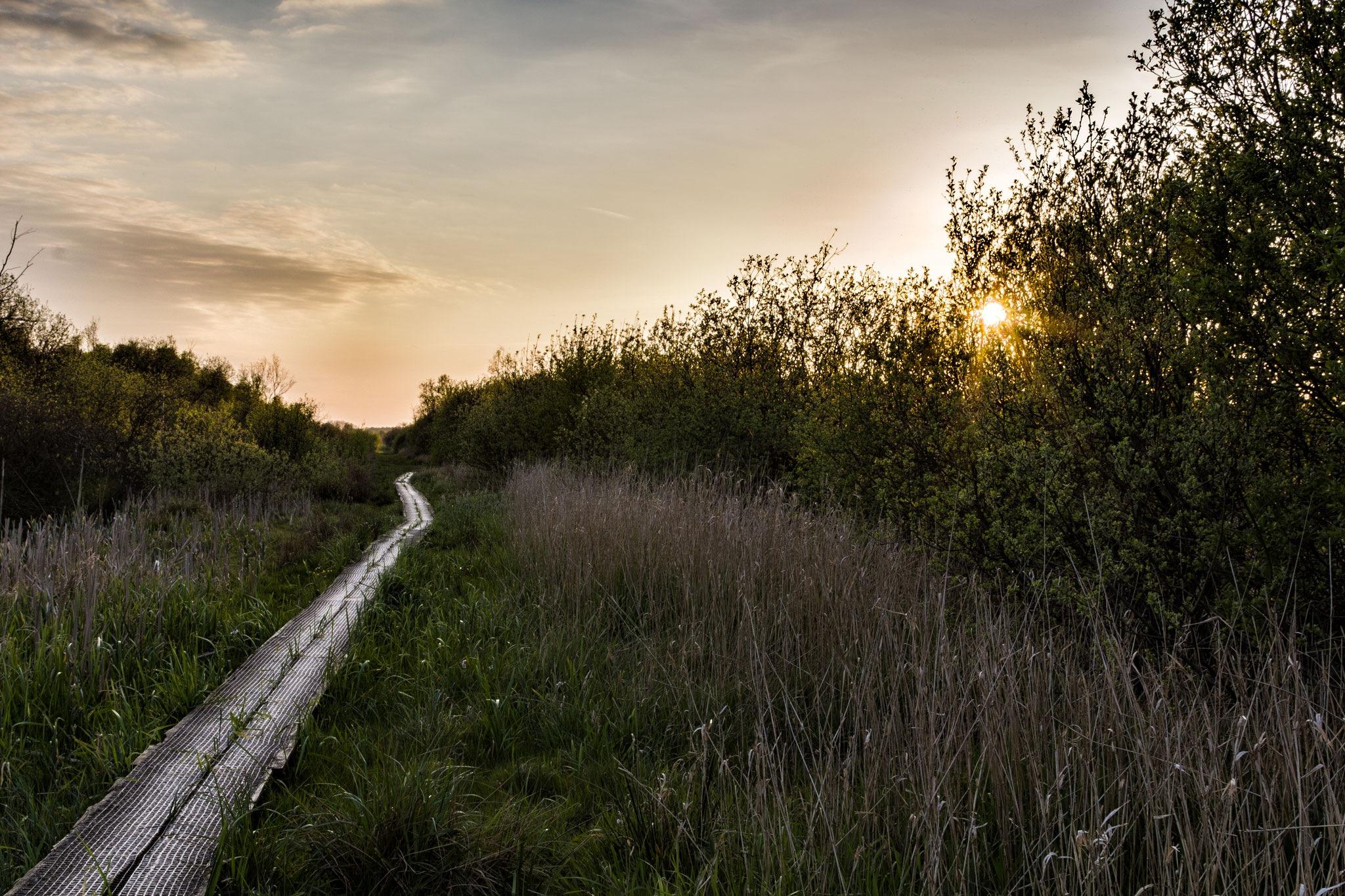 The narrow path by Claus Lyst Hansen