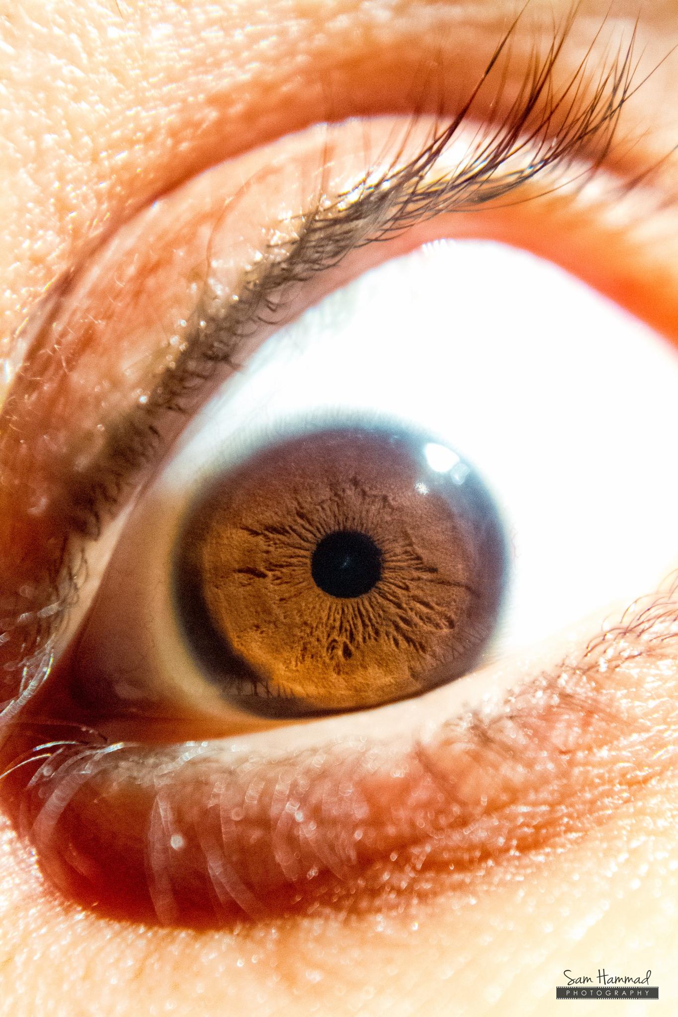 Photo in Macro #eye #eye lashes #brown #evil
