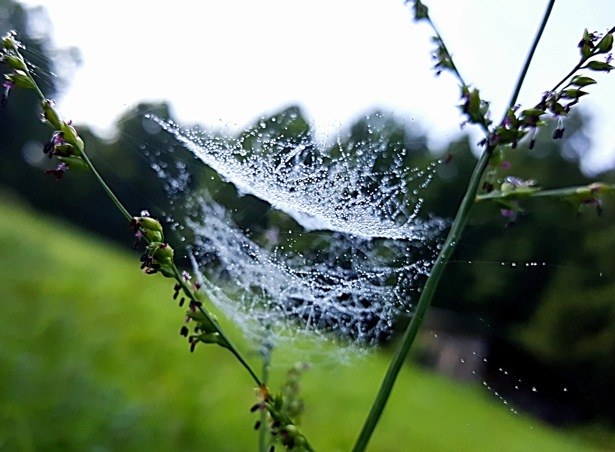 Morning Dew by Tammy S. Napier