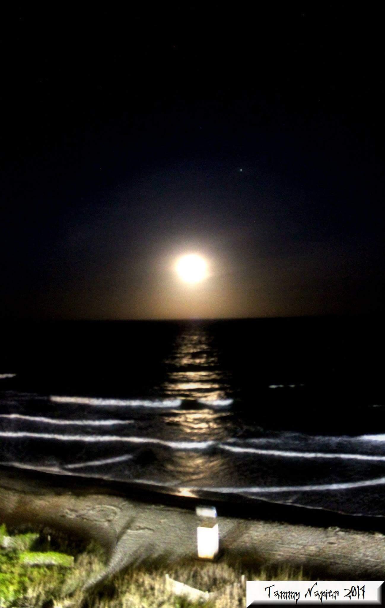Moonlight Stroll by Tammy S. Napier