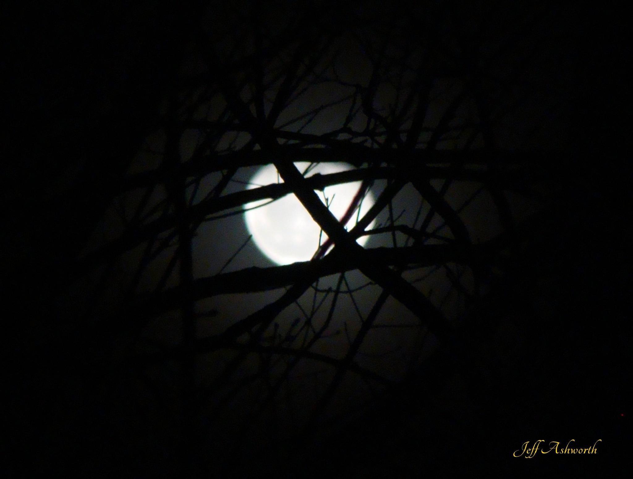 December Moon by jeffashworth