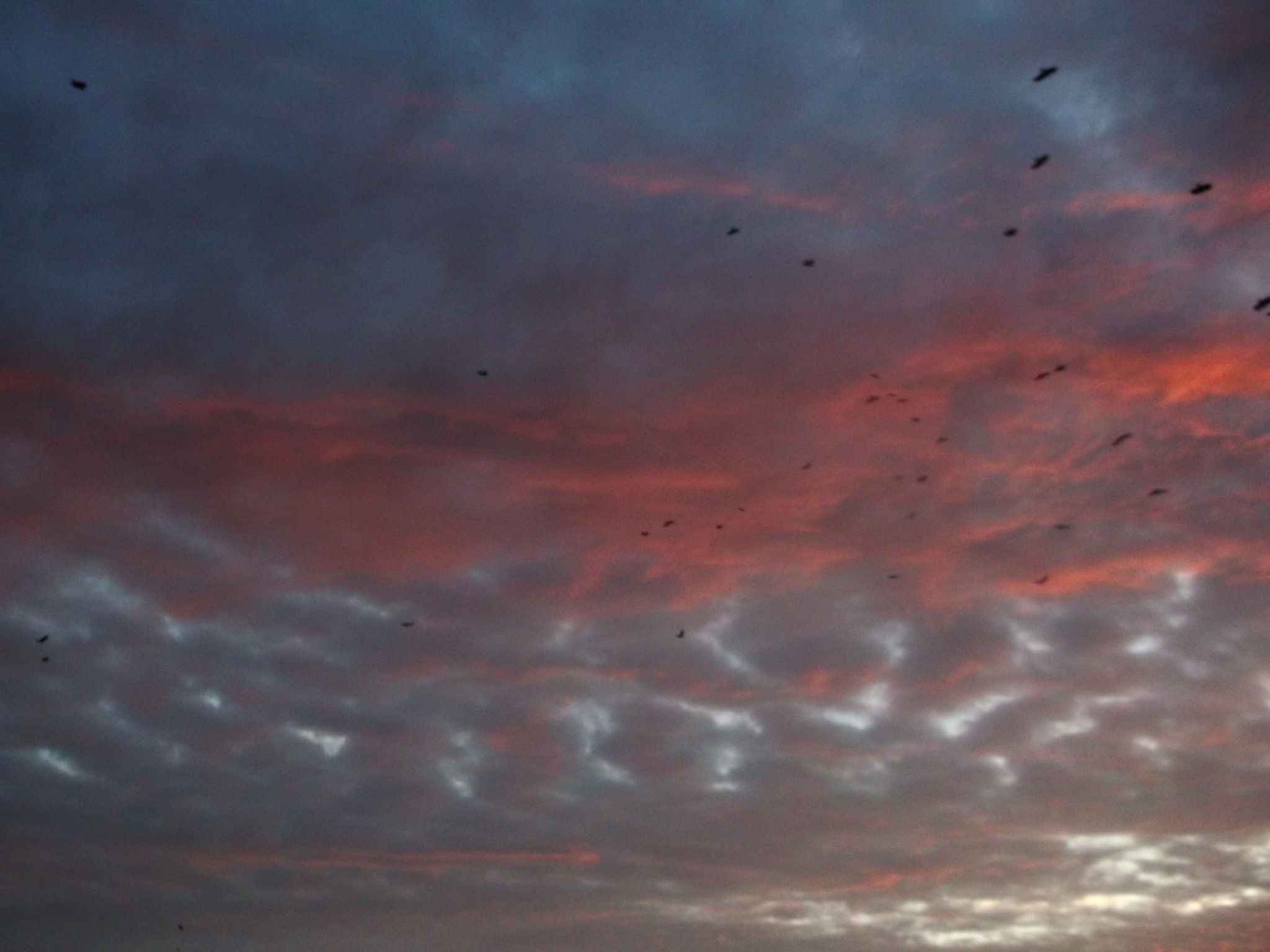 cold september morning, crows are leaving area :) by T.M.M.