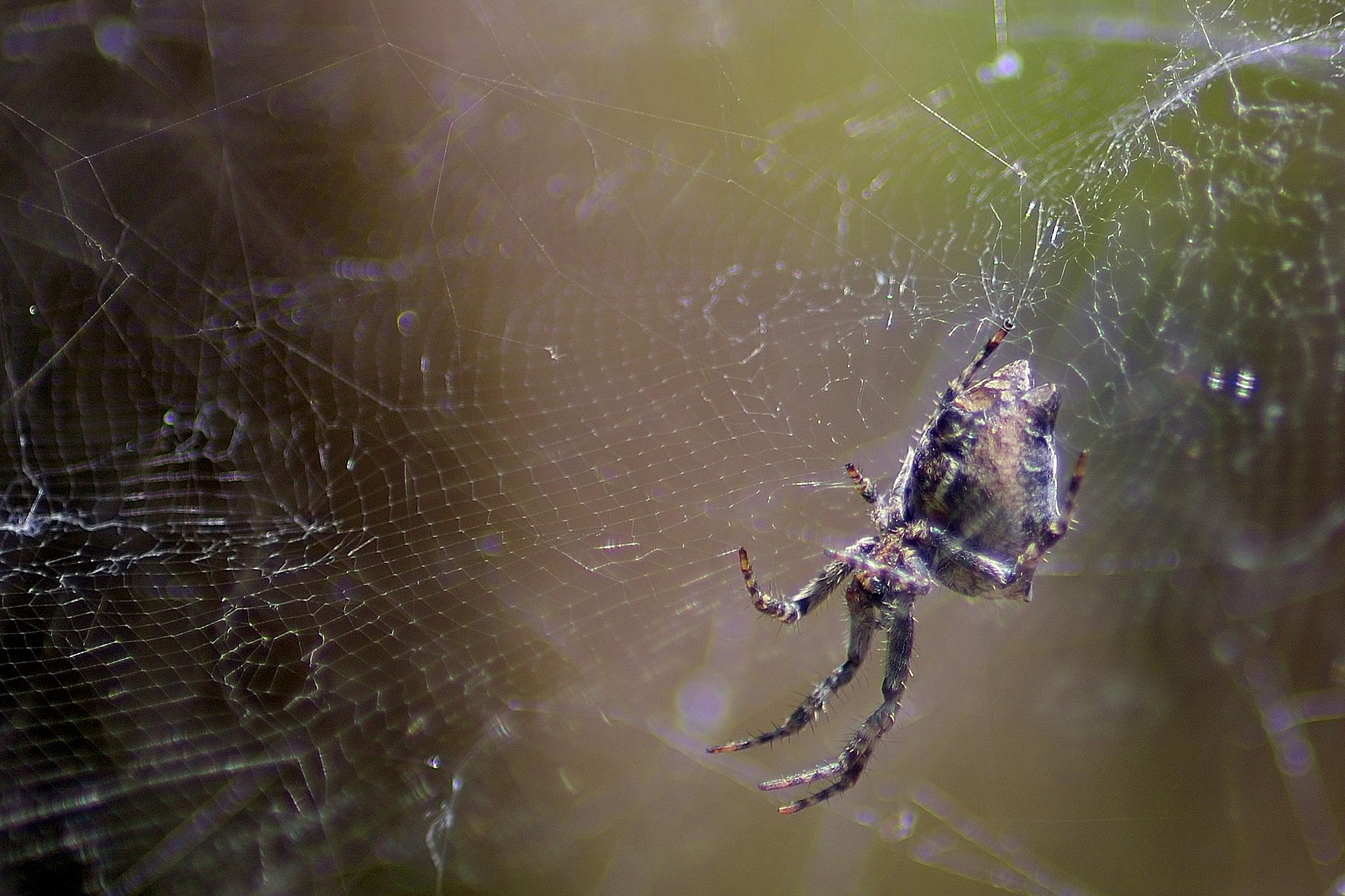 Photo in Nature #nature #spider #silk