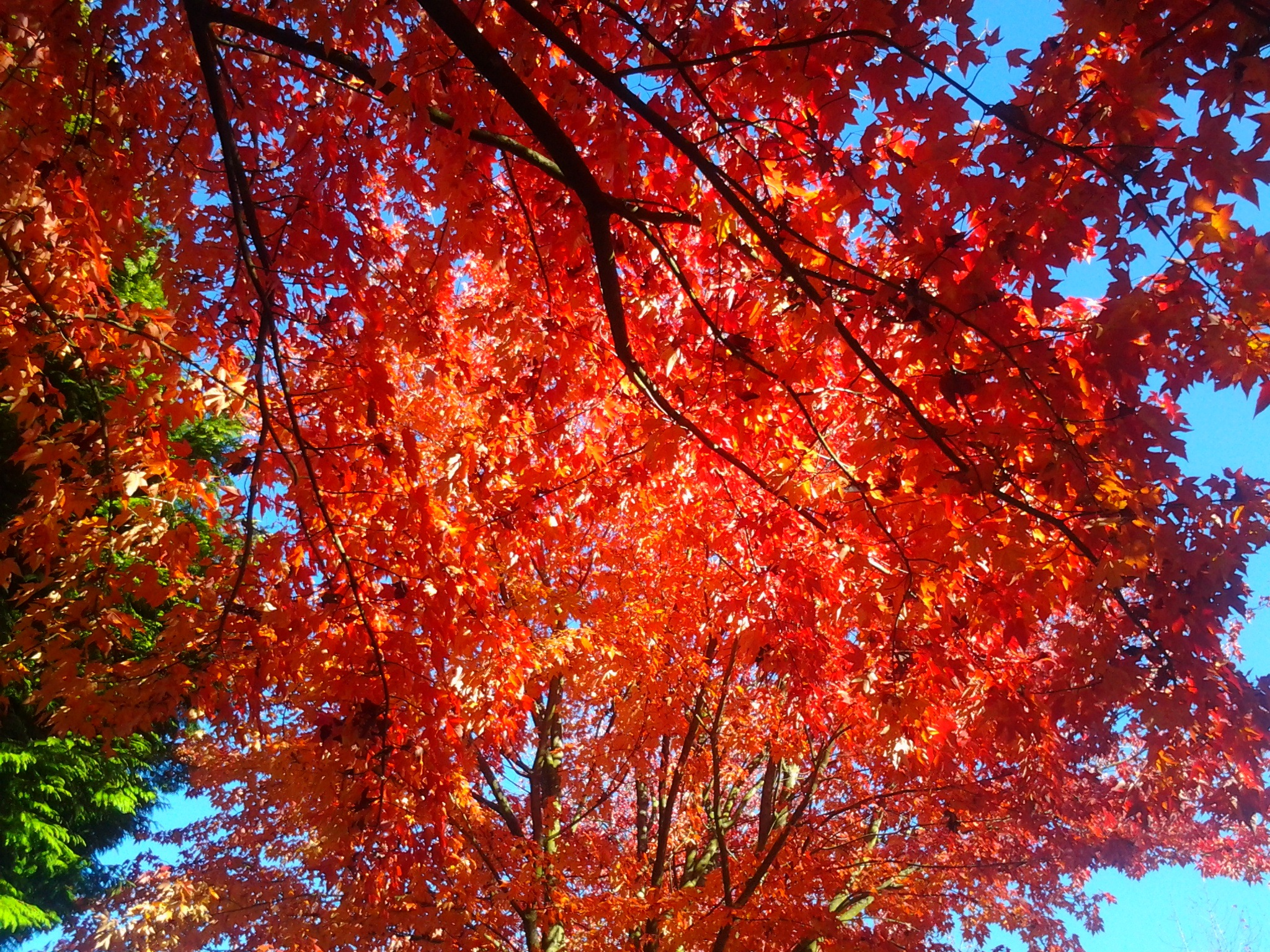 Authum leaves by Alan Hoye