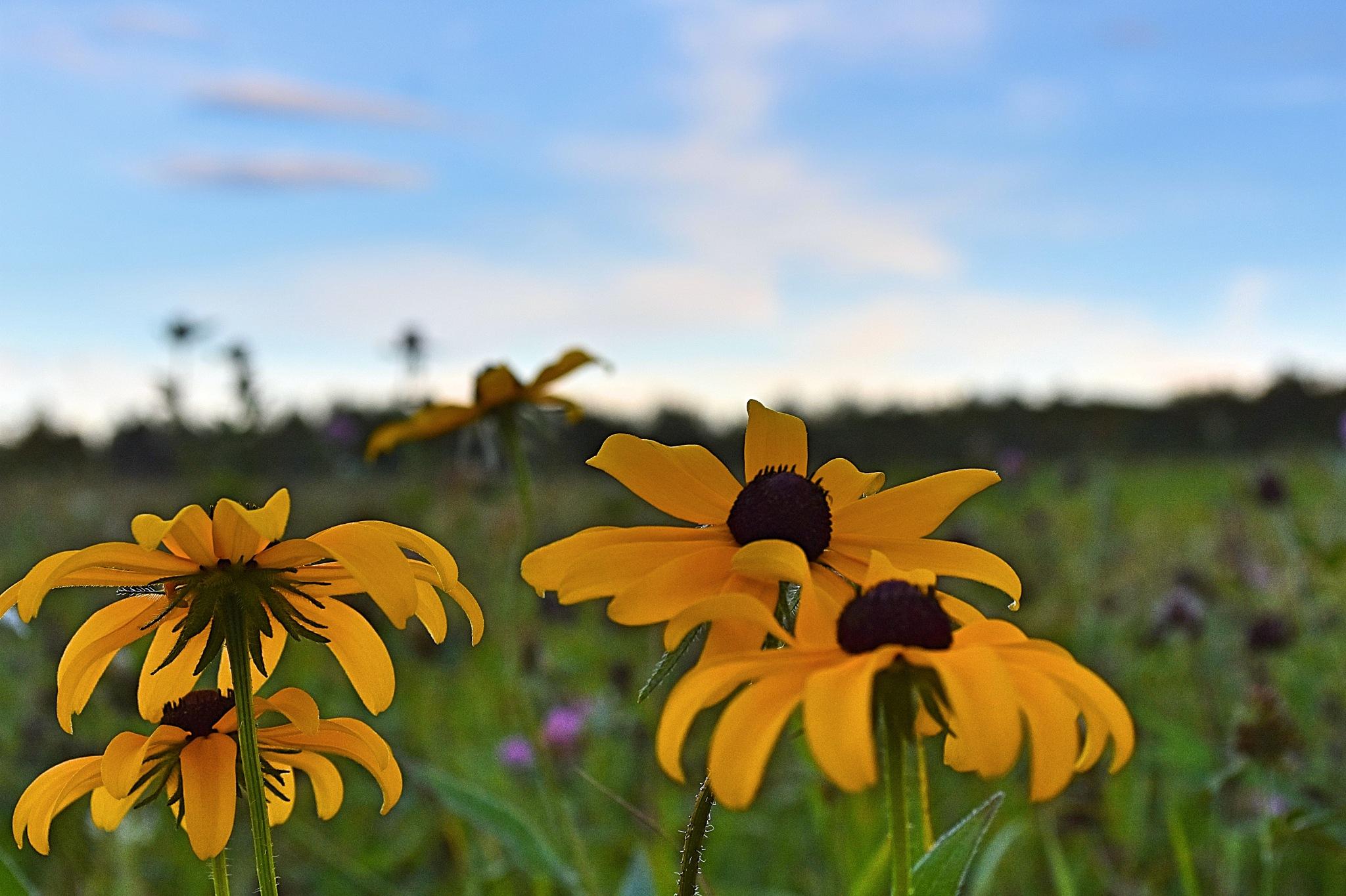 Yellow Flowers by Gena Koelker