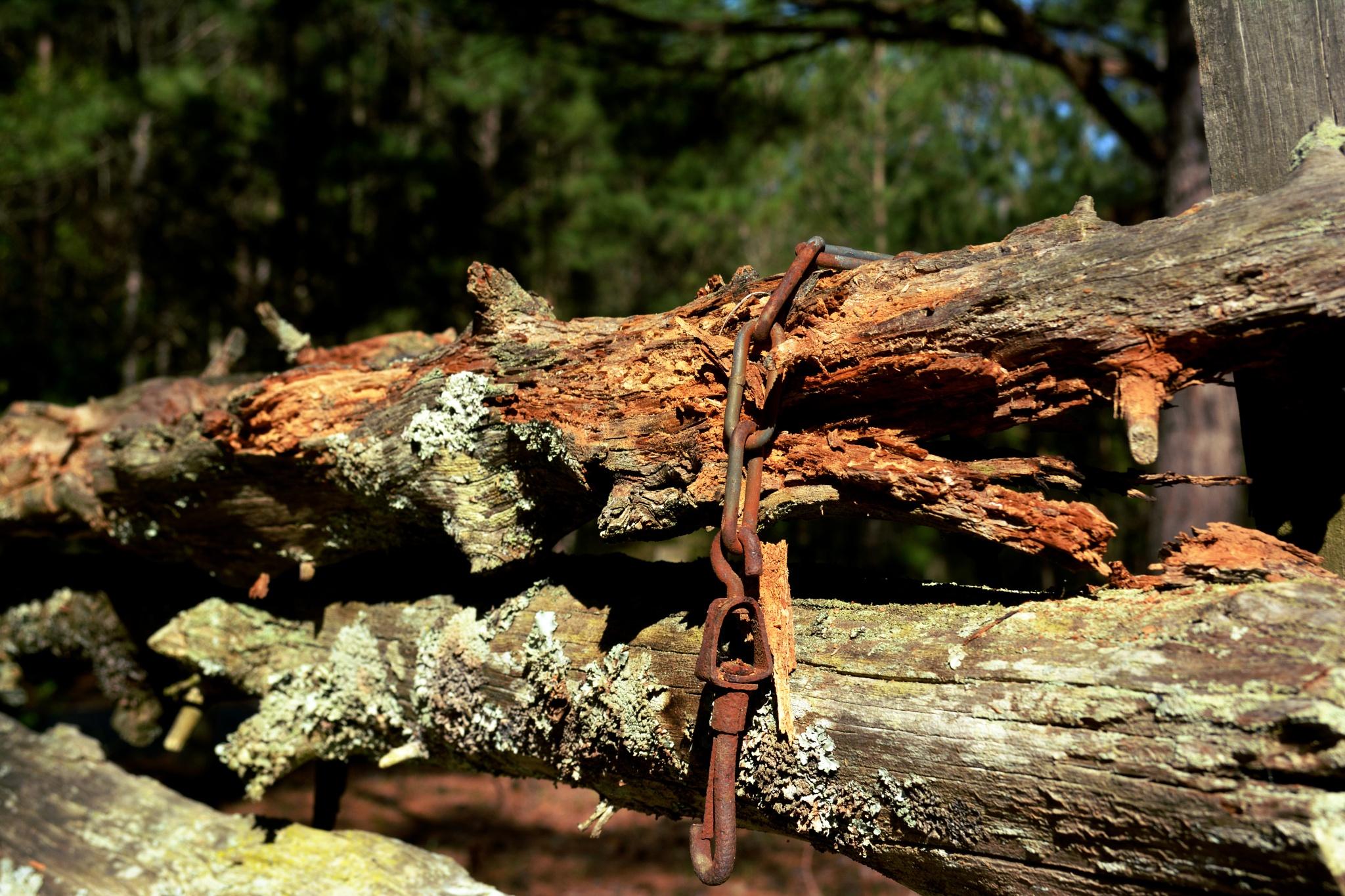 Metal and Wood by Gena Koelker
