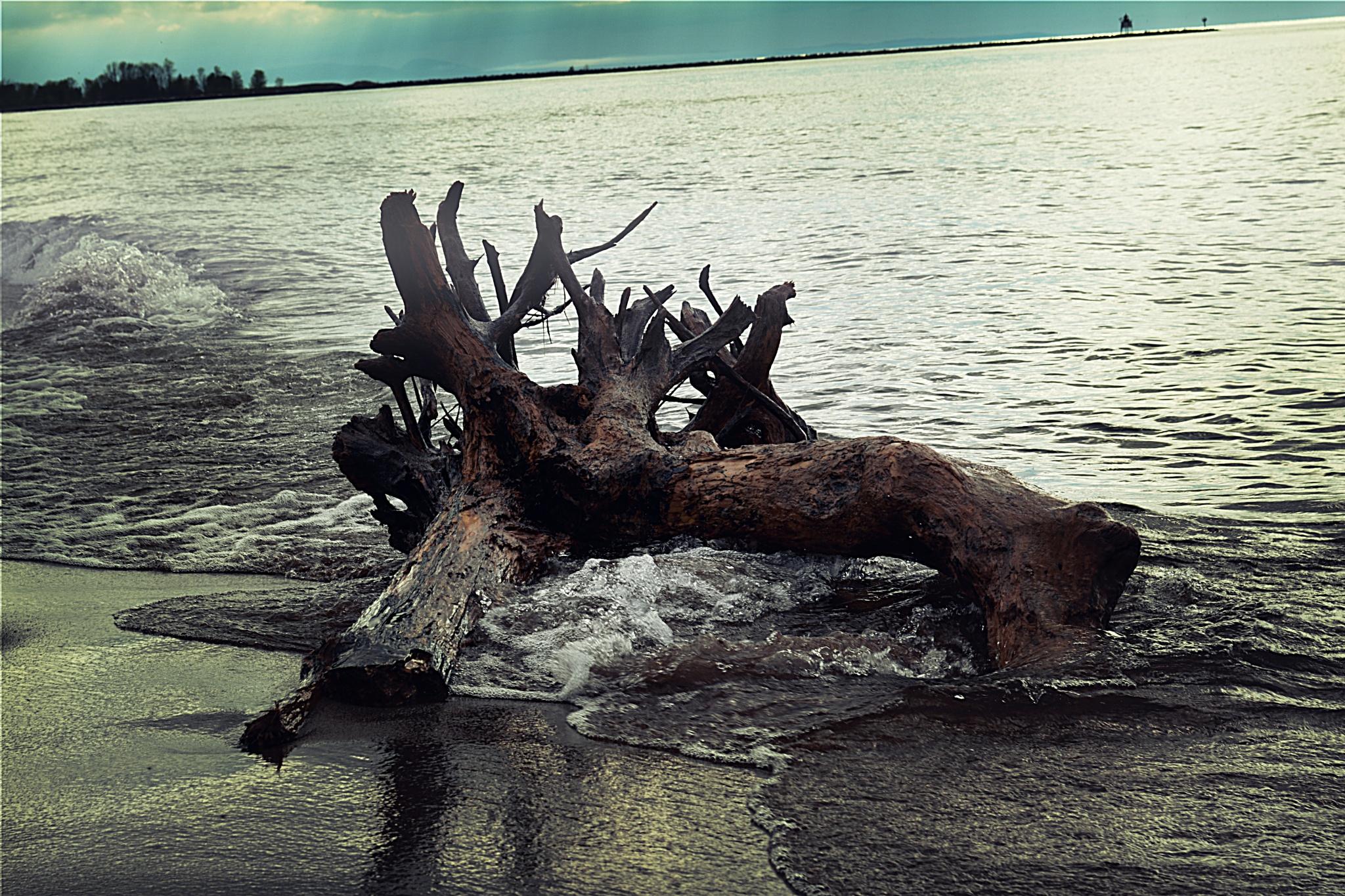 Photo in Nature #sand #lake #lake superior #tree #driftwood #water #nature