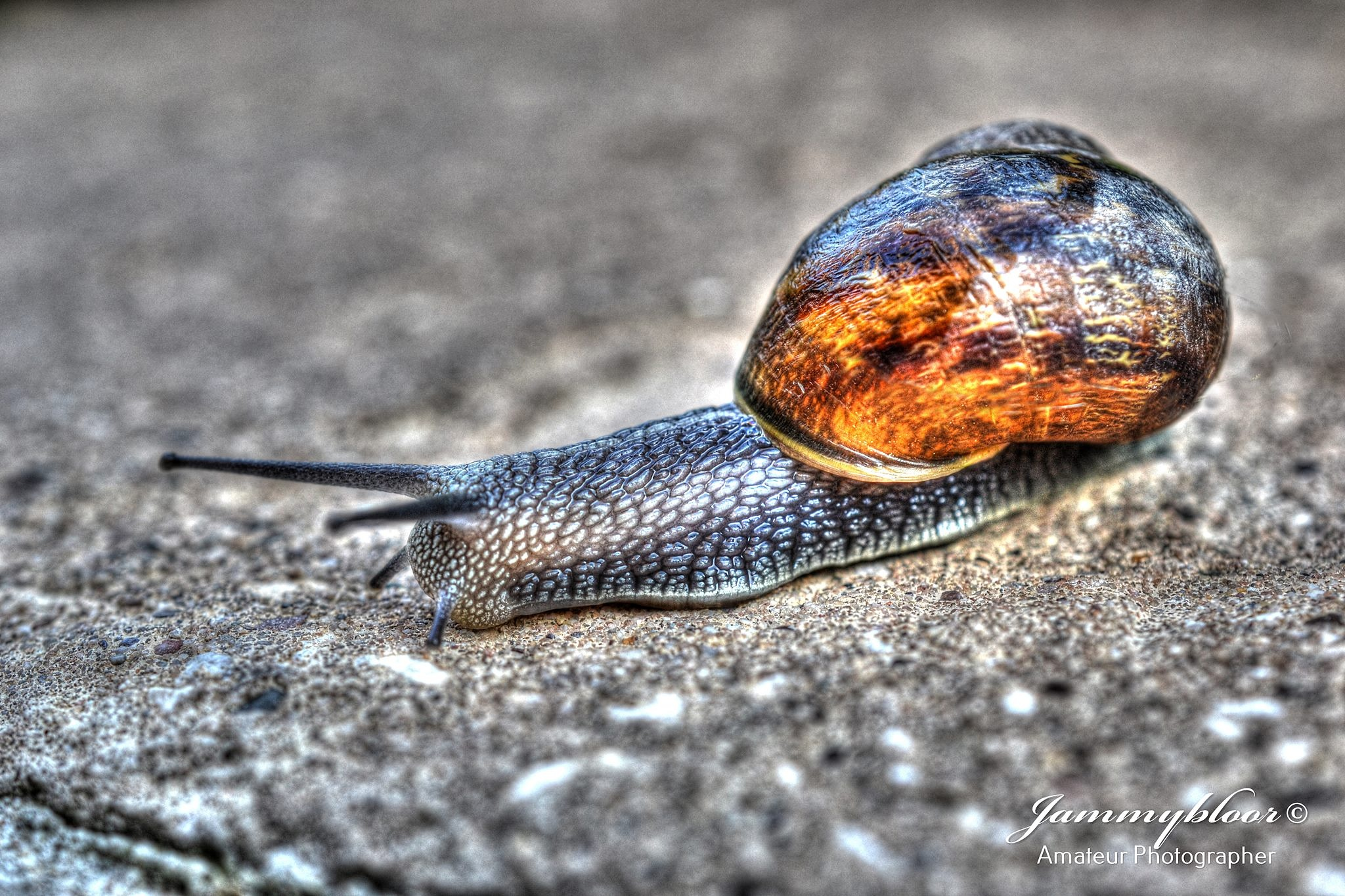 Snails Pace by jammybloor