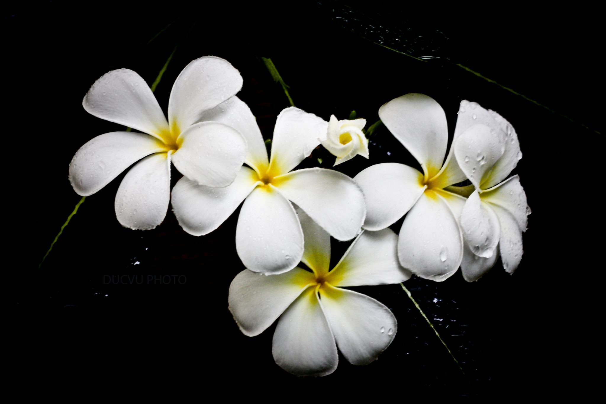 Flower by ducvu1310