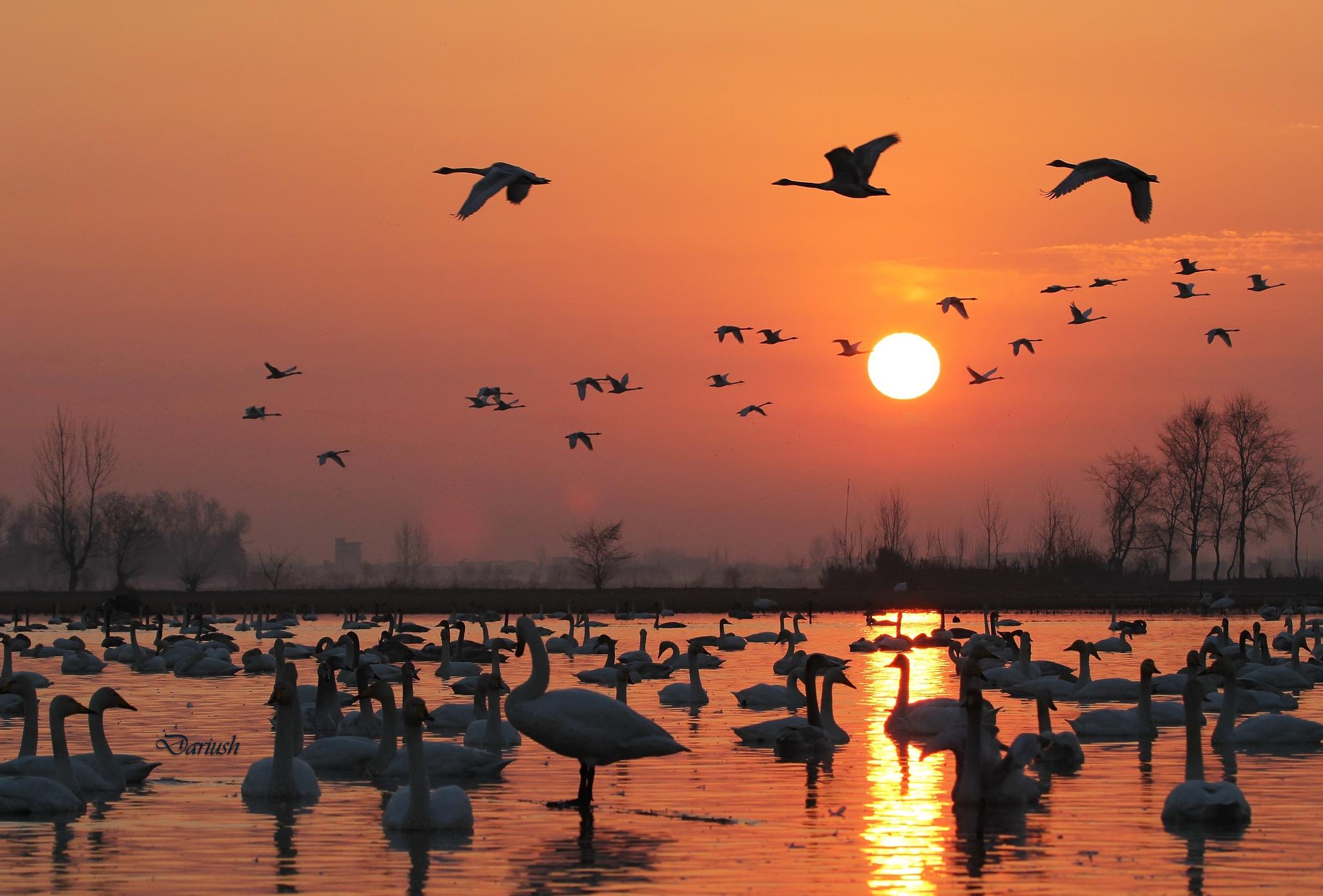 Sunrise by Dariush