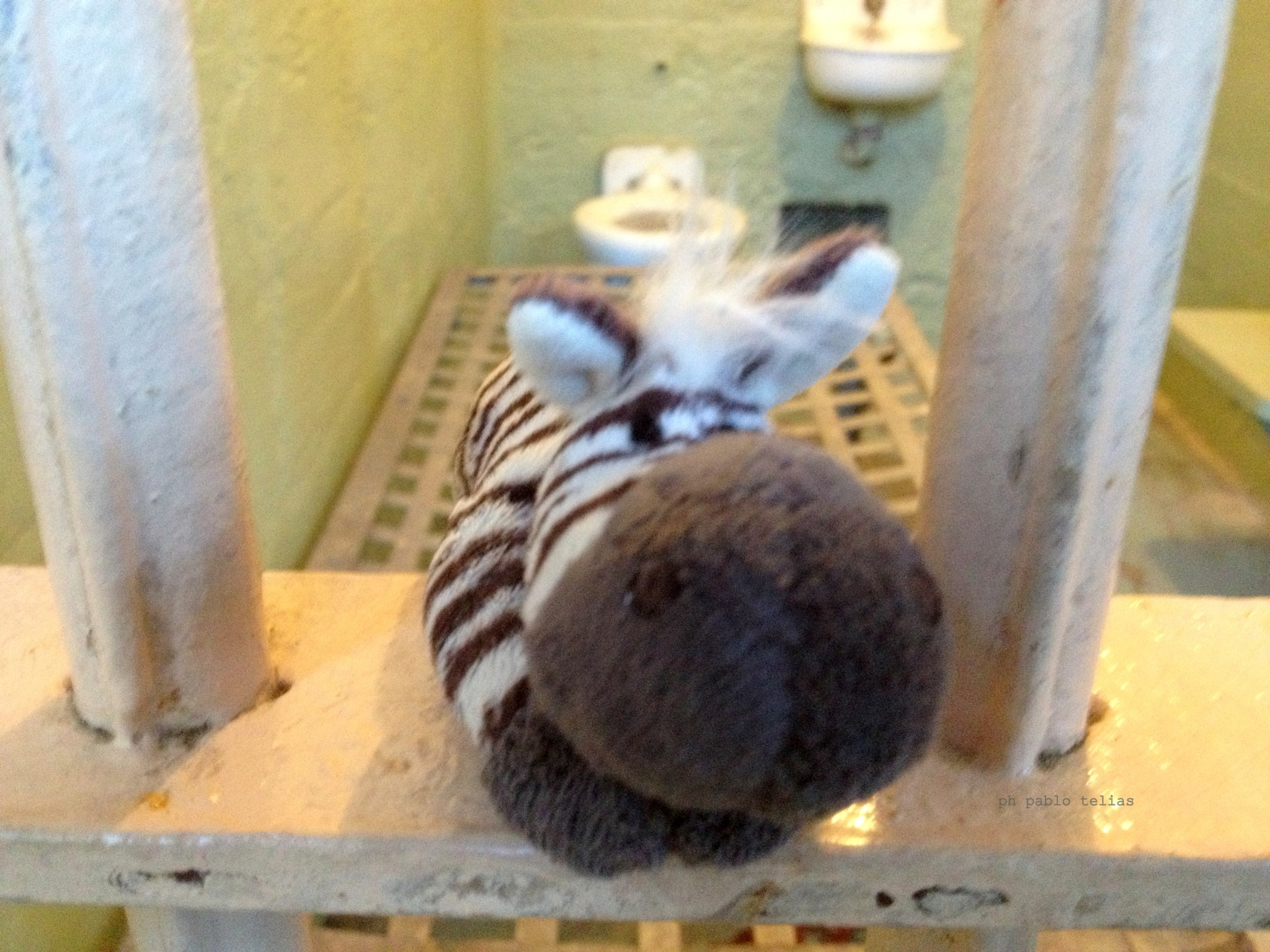 Zebri  arrested in alcatraz by PabloT