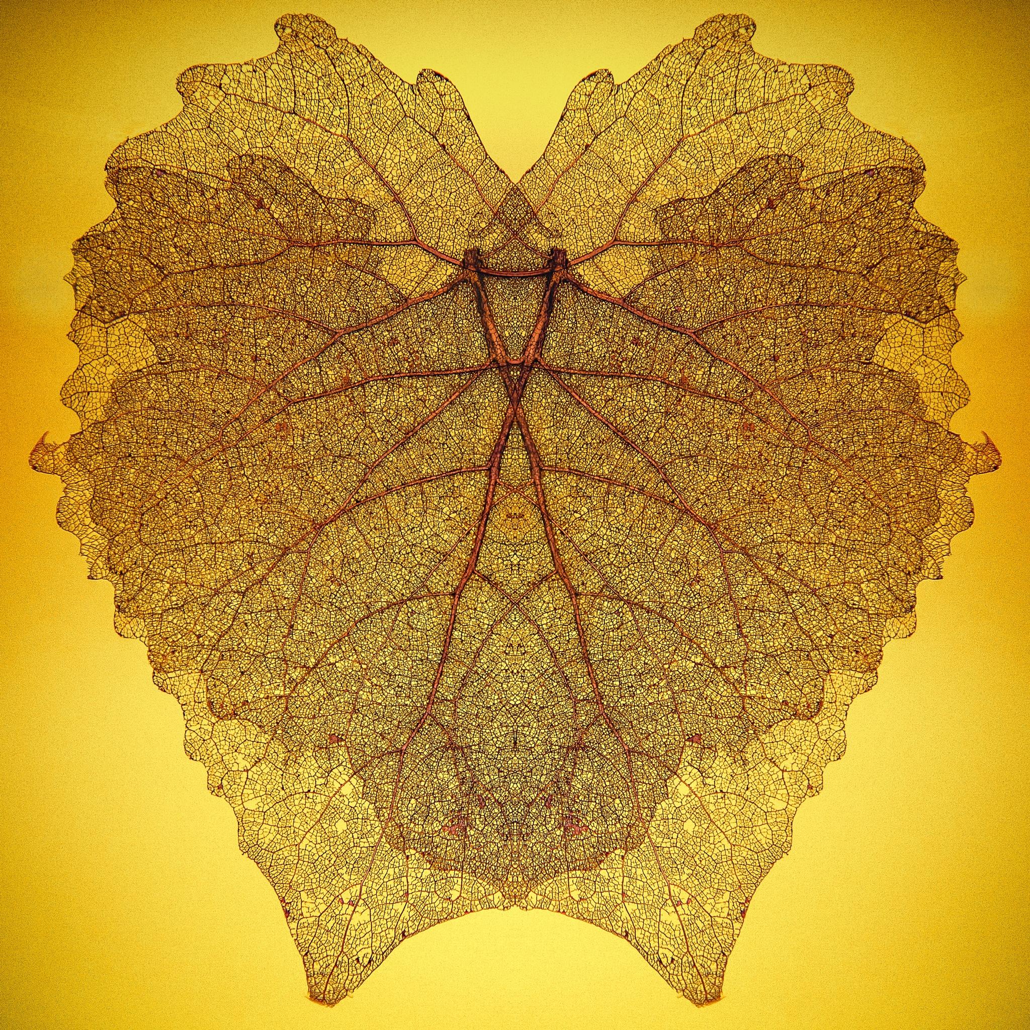 Leaf Creature by Heasley