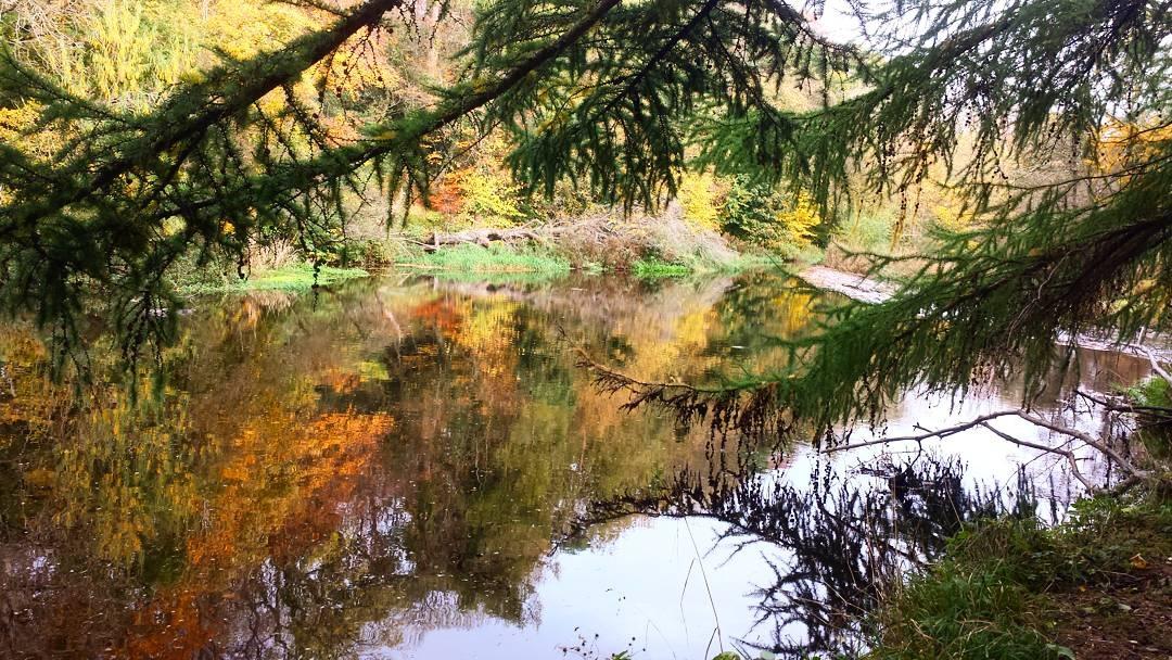 autumn  by brightredsquirrel