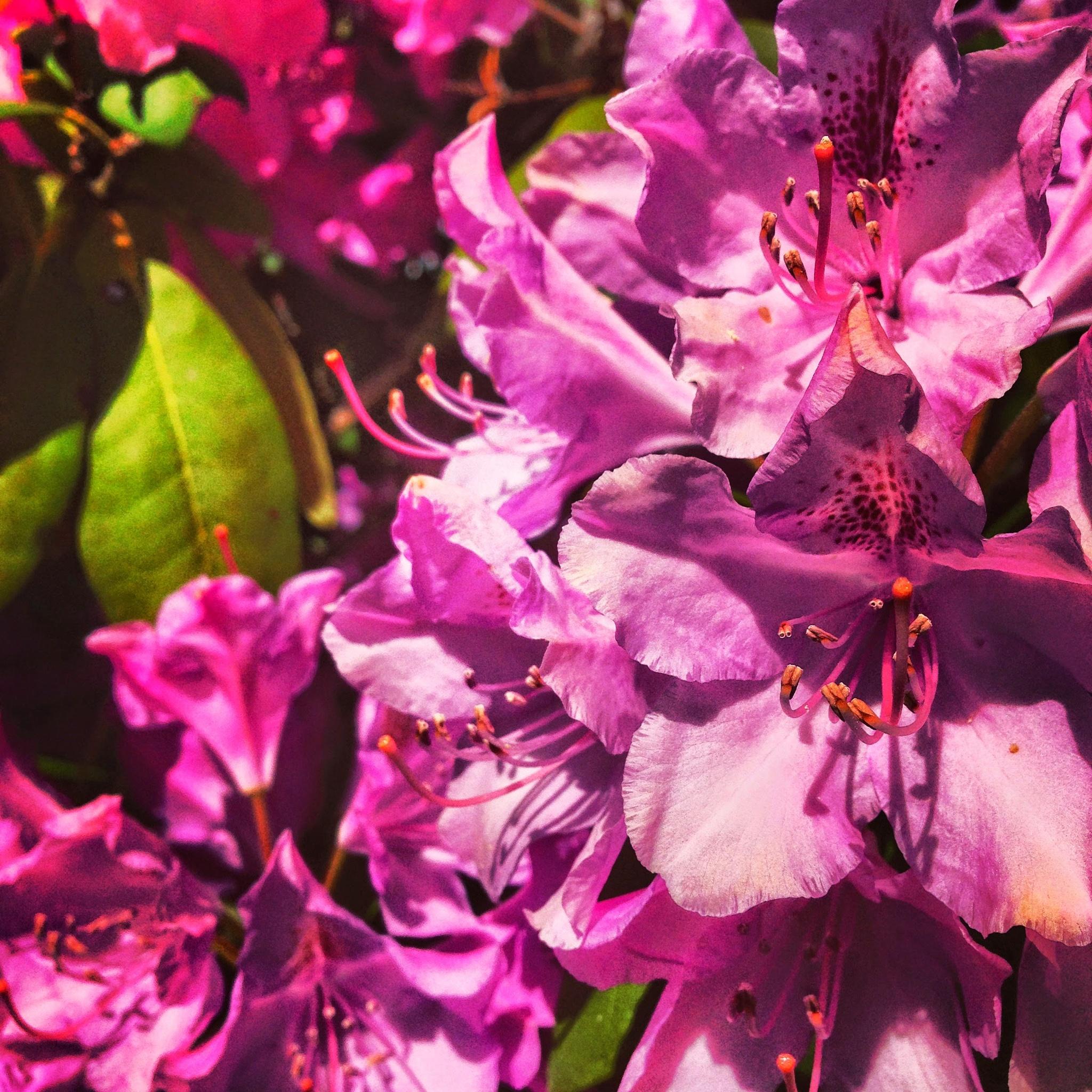 "Flowers by Amanda ""Living Faerie"" Brueckner"