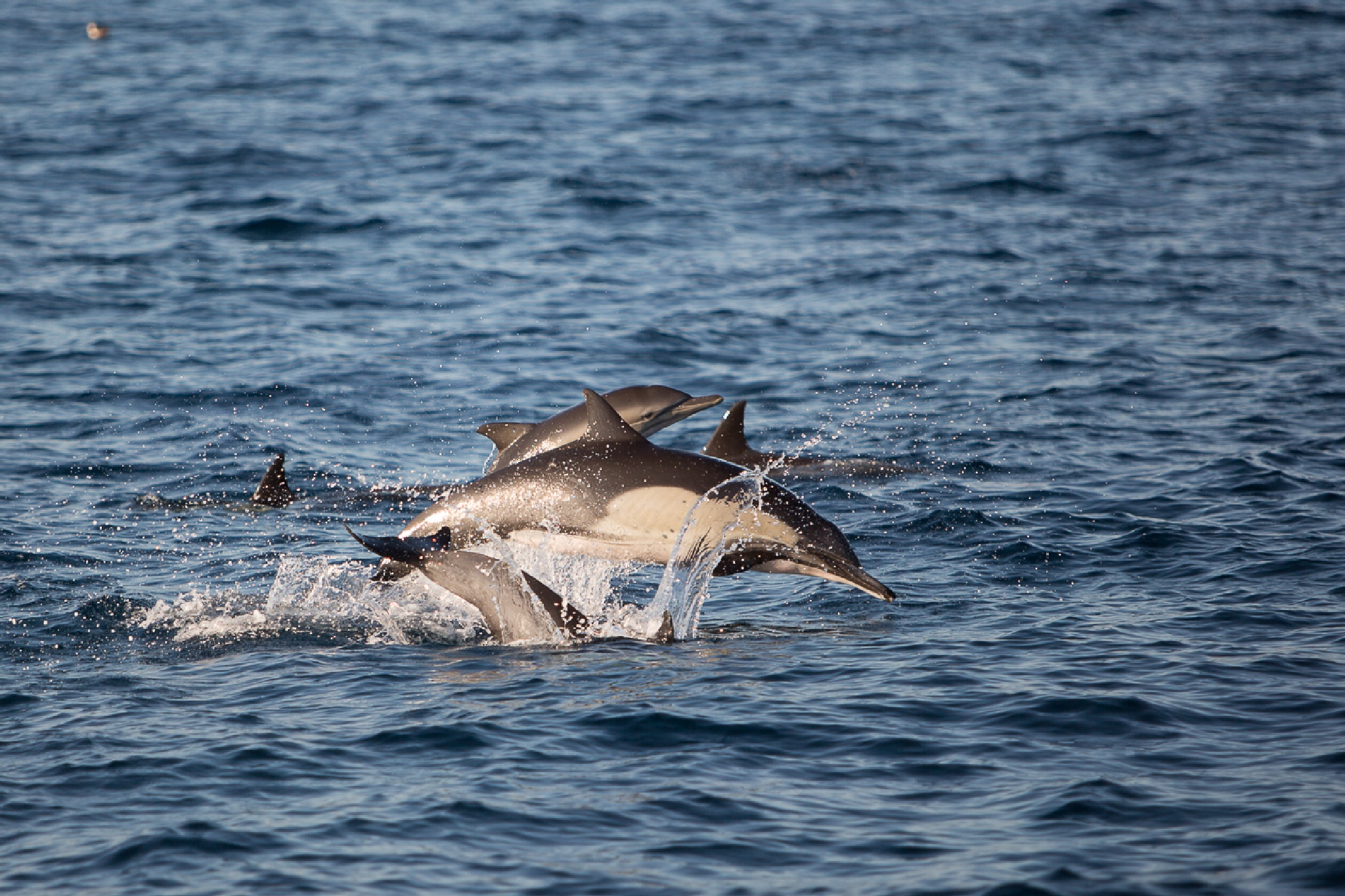 Happy Dolphins by MatthewJDavis