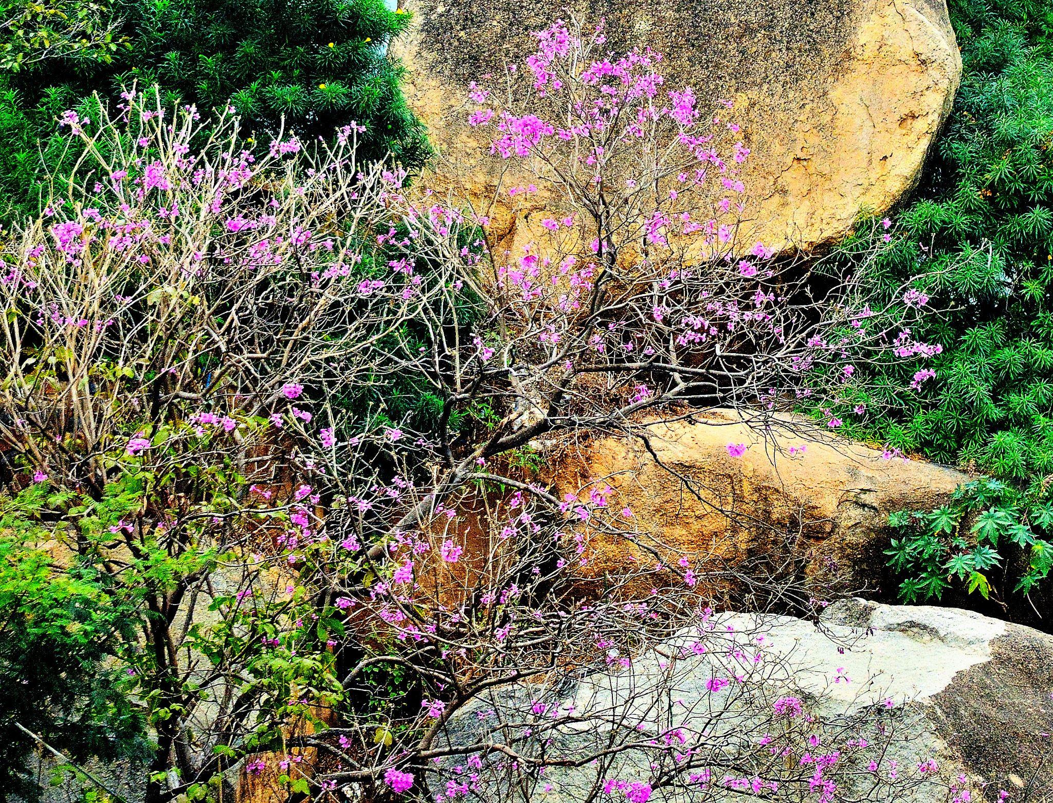 Nature, Great! by RajeshwarPuvvada