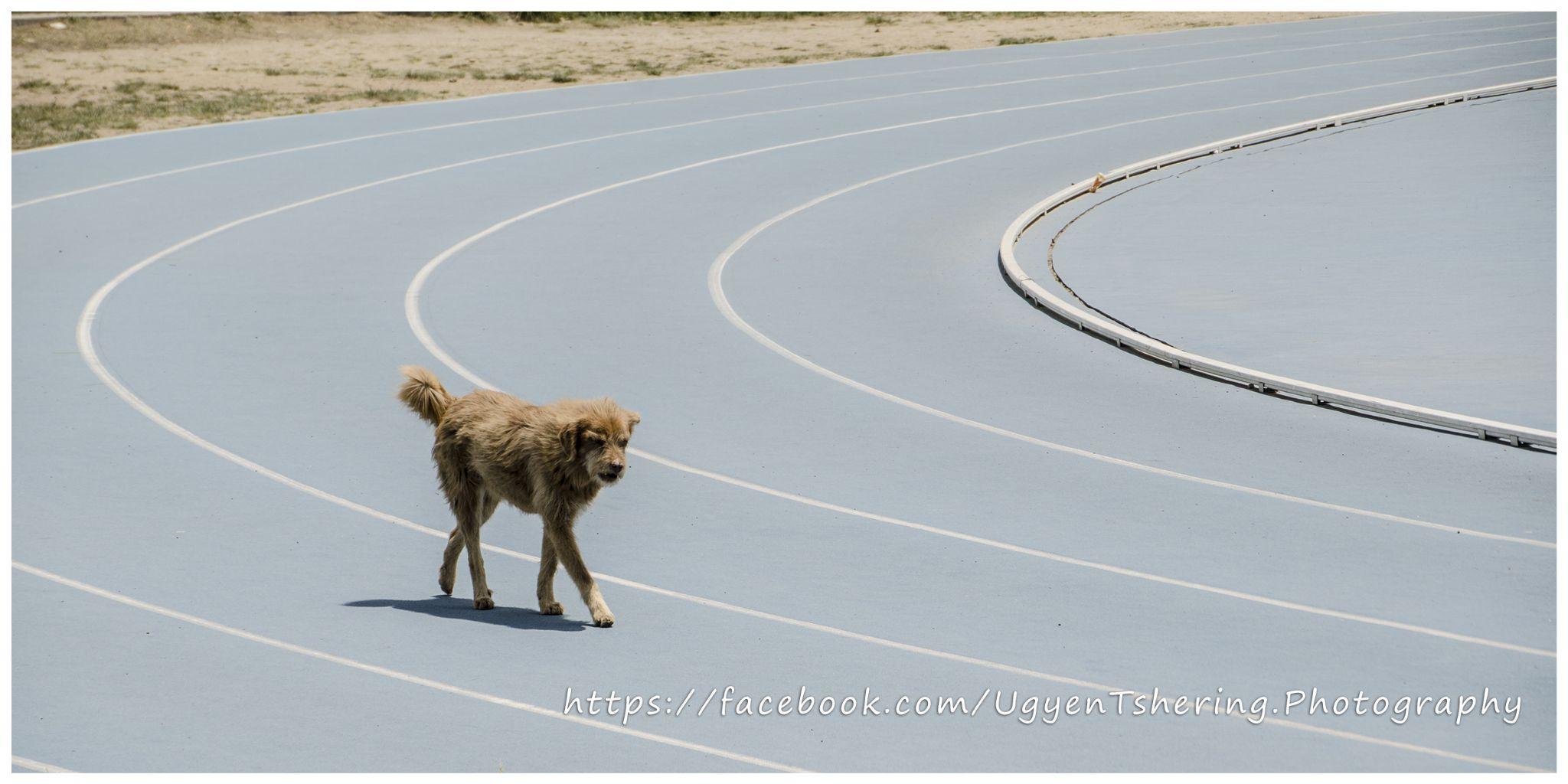 Dog on track by Ugyen Tshering