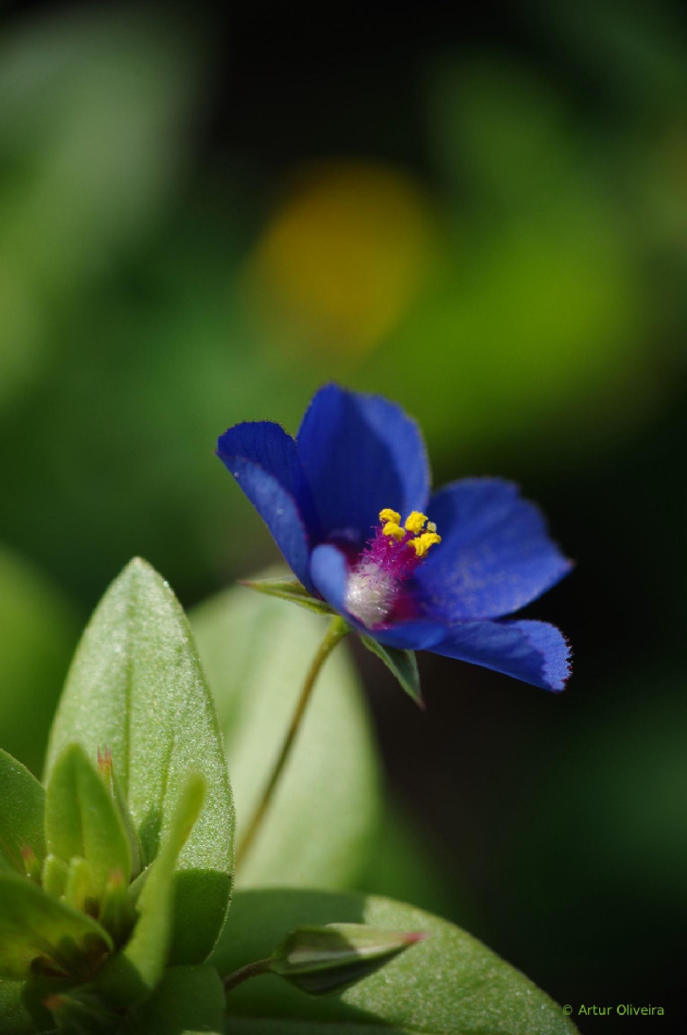 Bleu! Bleu! L'Amour et Bleu ... by Artur Oliveira