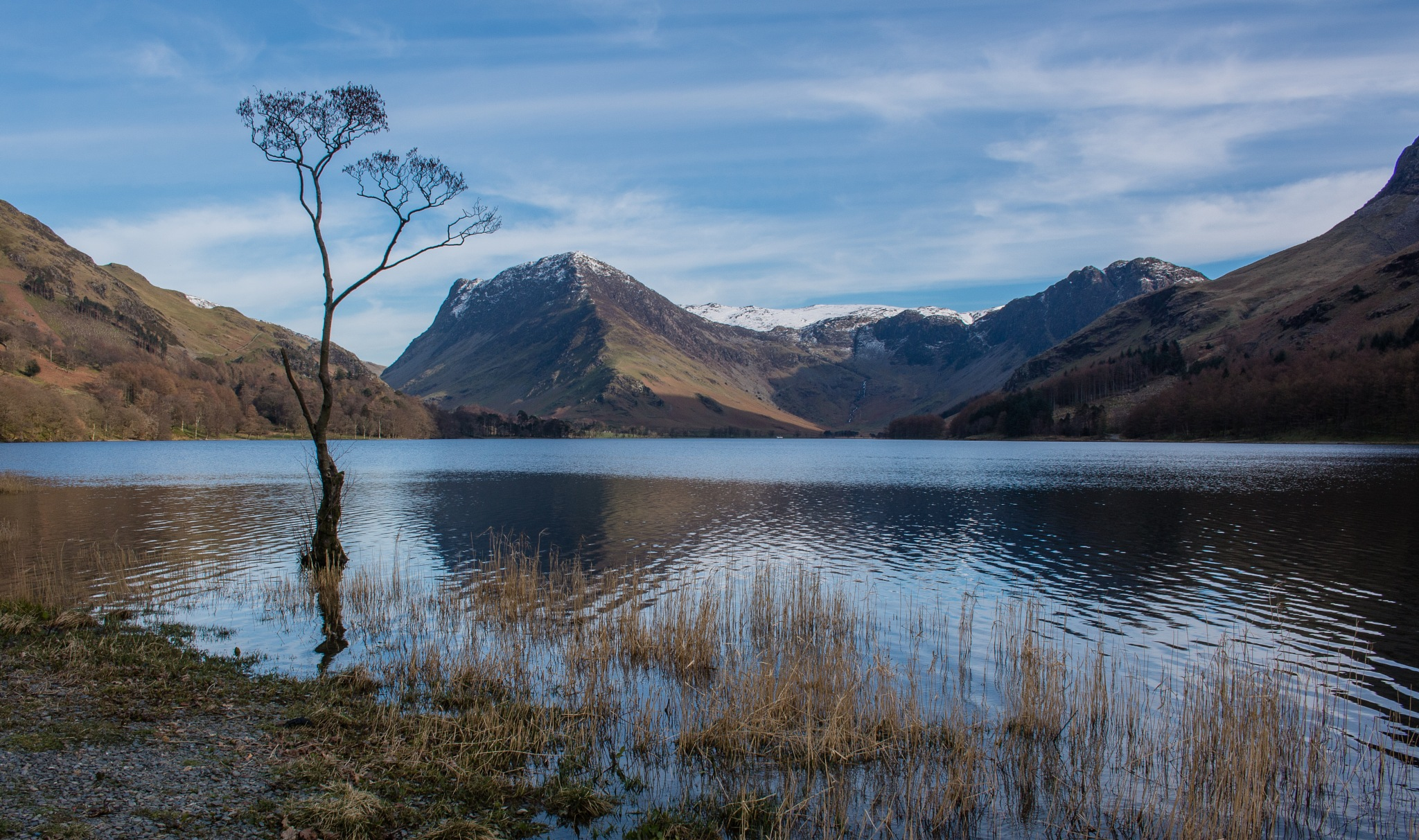 The Buttermere Tree by Chris Wood