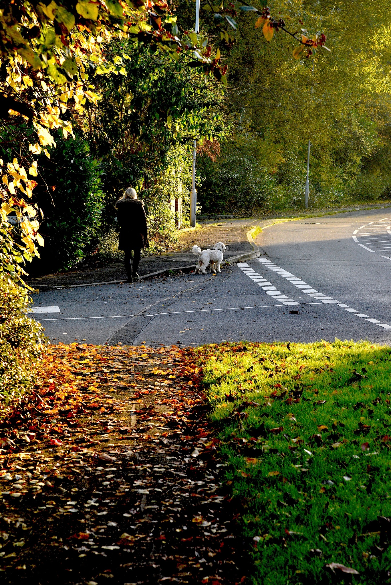 Autumn Walk with Dog. by John Cater