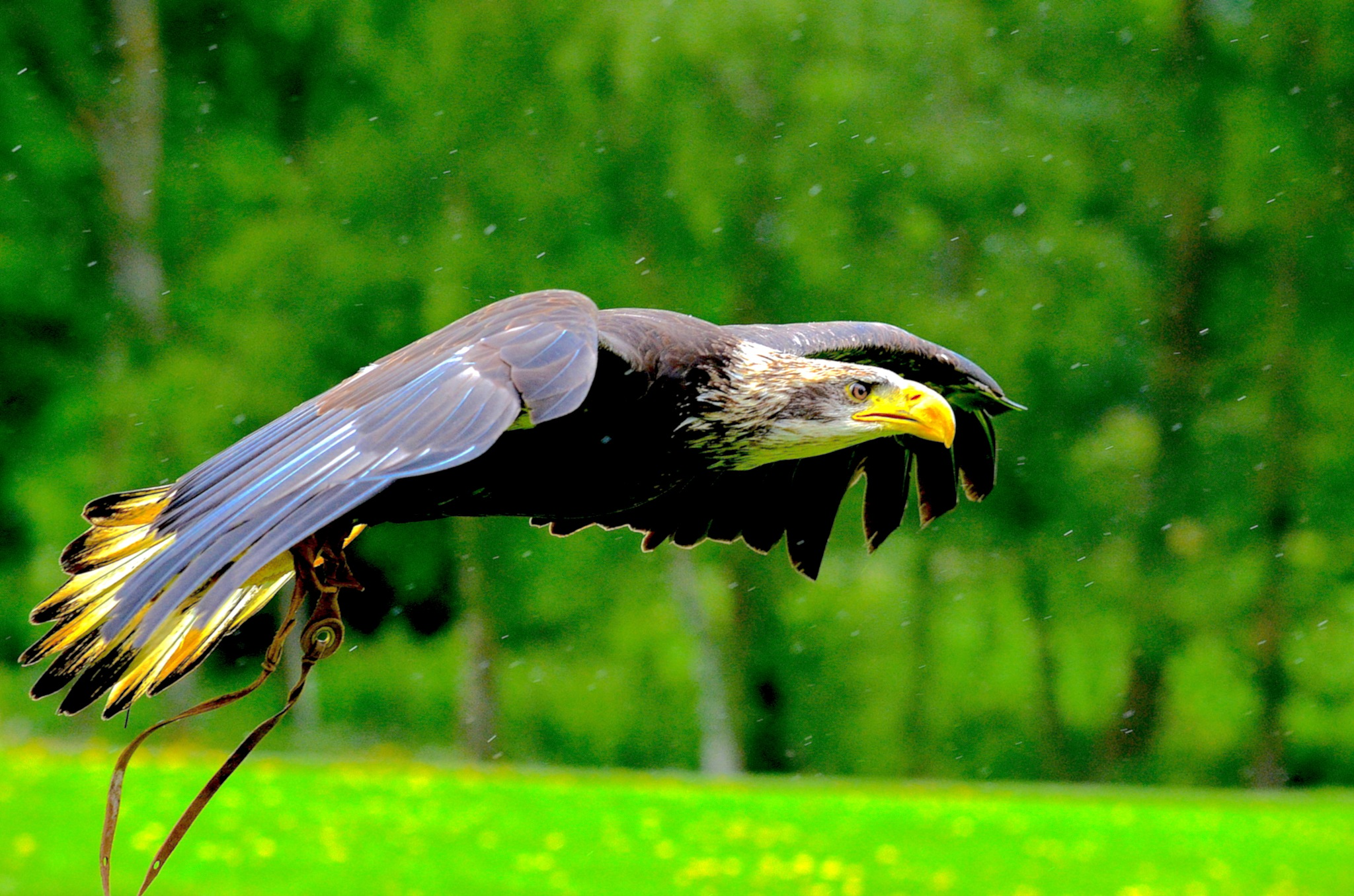 Eagle. View in Wide Screen. by John Cater