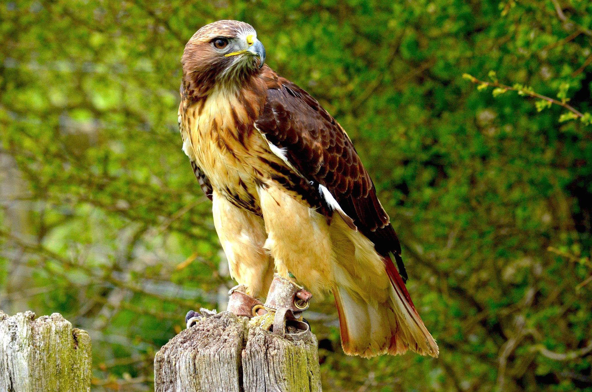 Birds of Prey. by John Cater