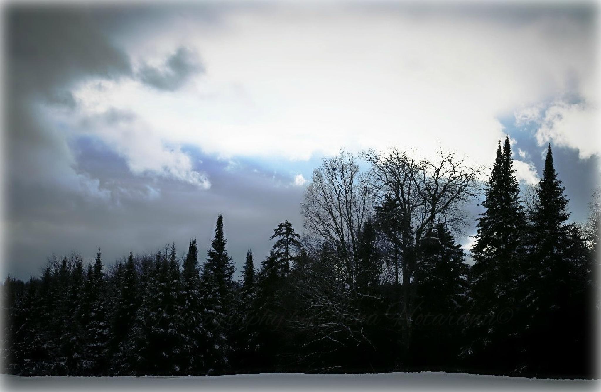 Moscow Woods, Vermont by Elena Hotaranu