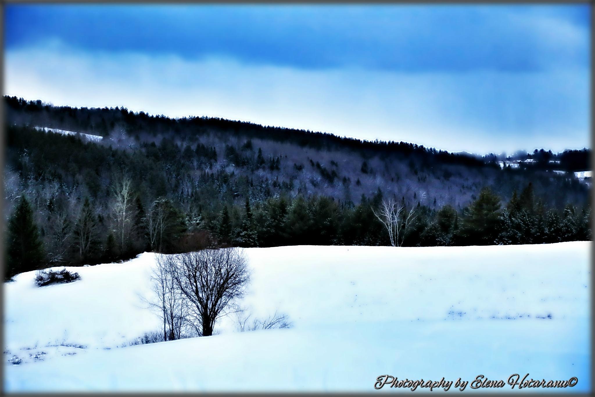 Winter in Vermont by Elena Hotaranu