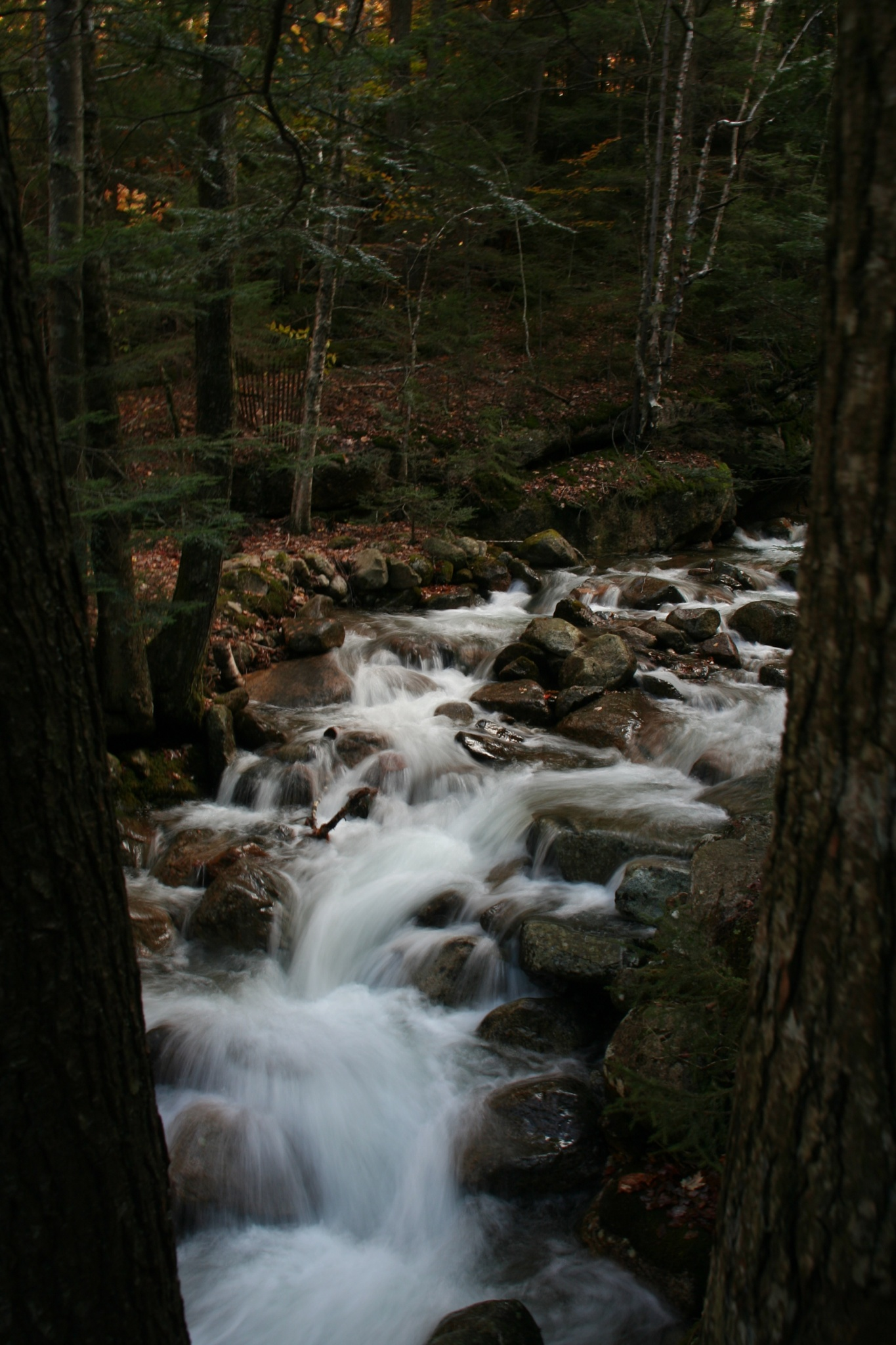 stream  by Mark Evers