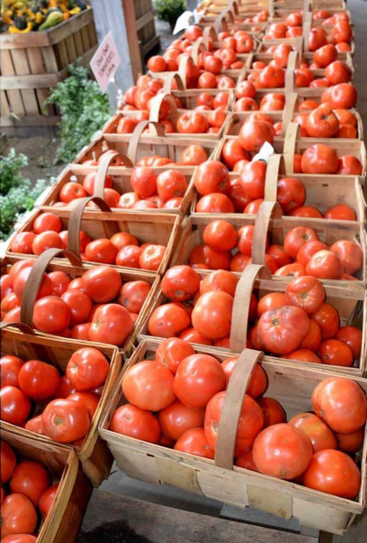 Tomatoes  by Tracey Colon
