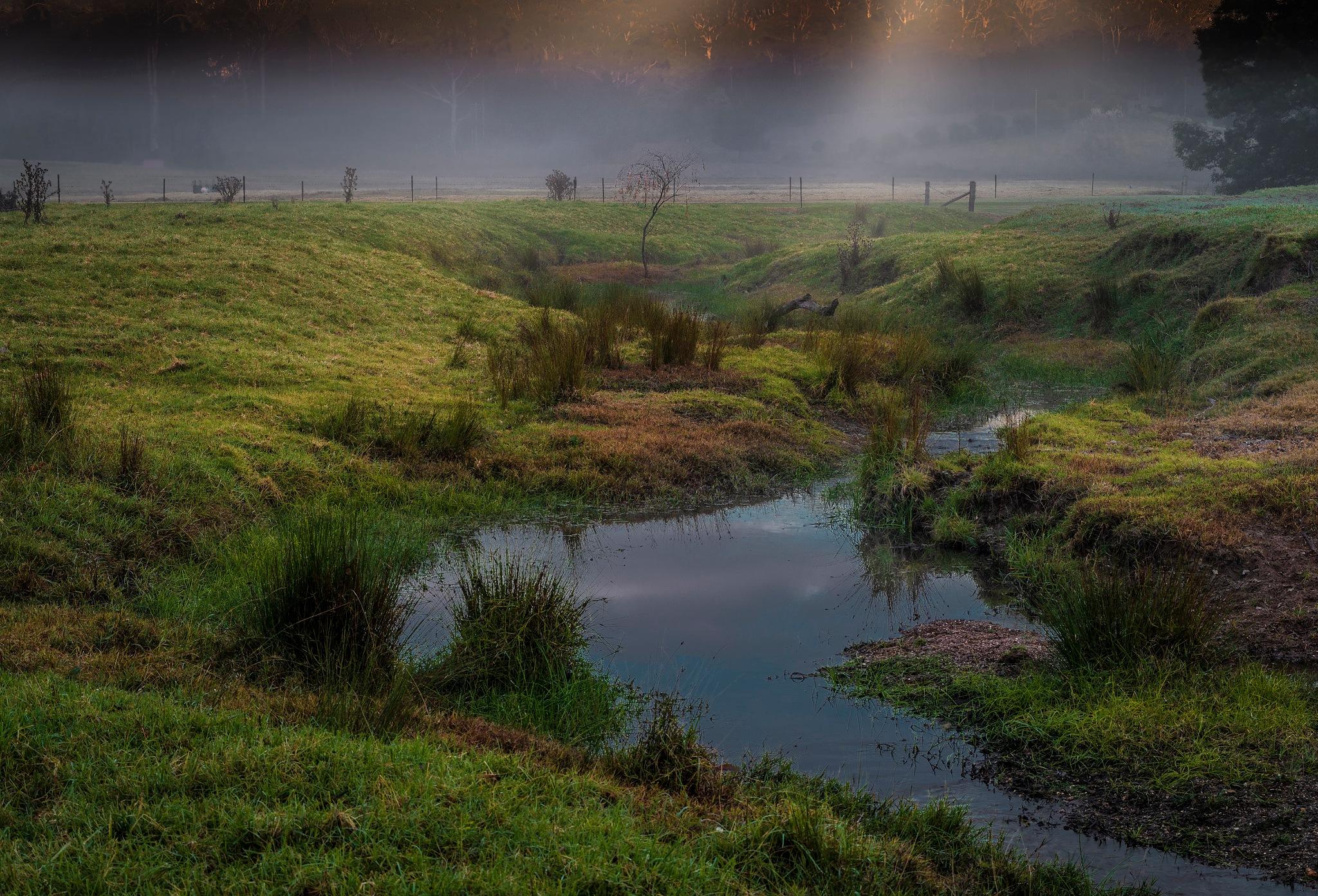 Misty walk by Thomas Skulander
