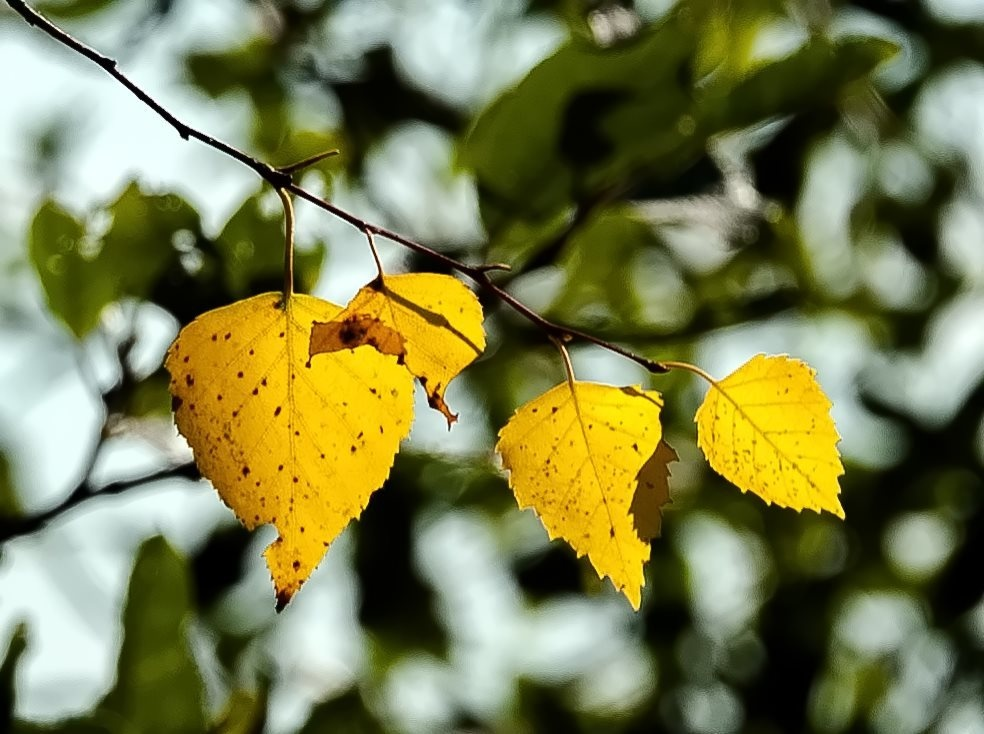 Photo in Nature #autumn #leaves #nature