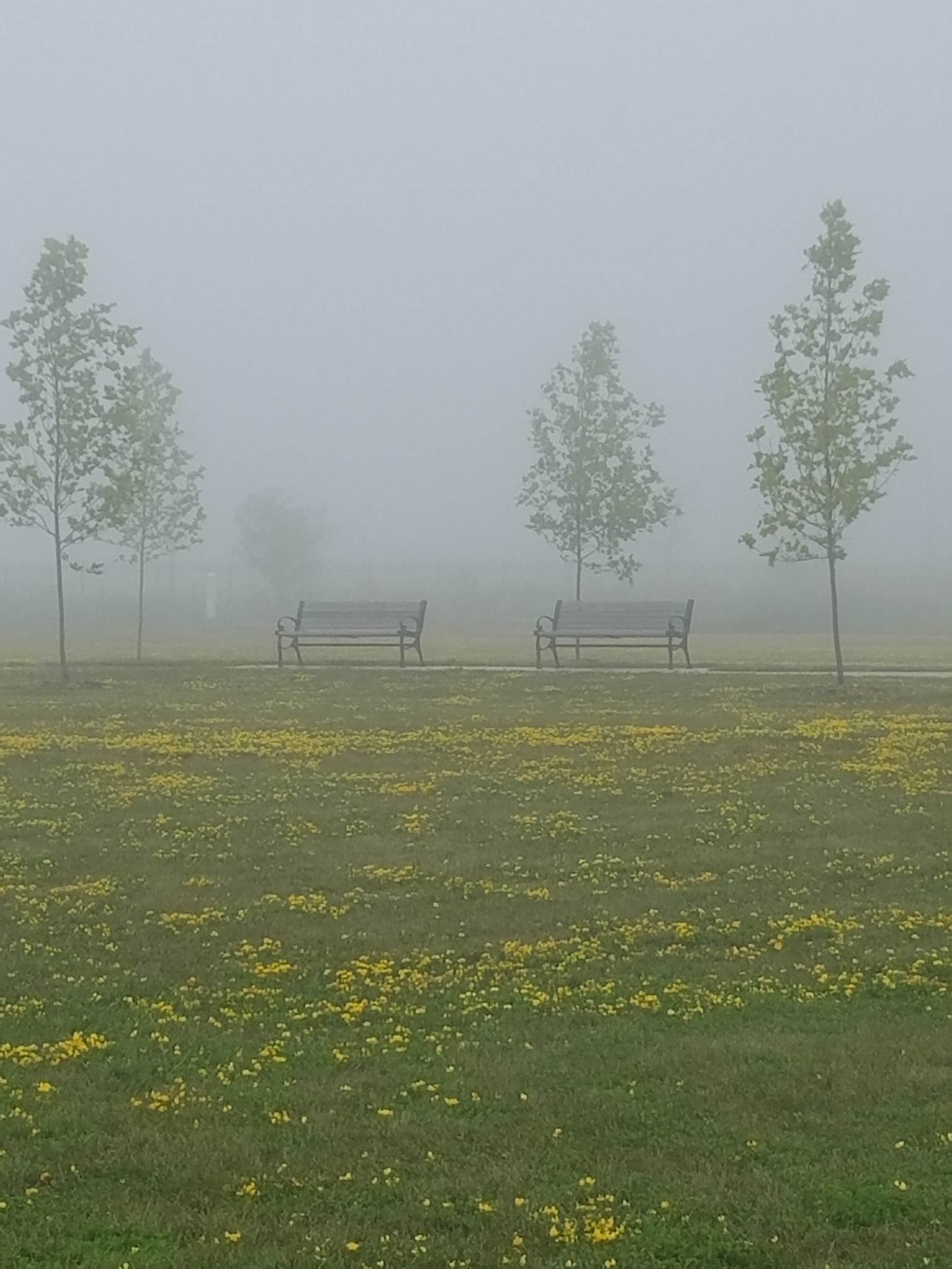 a Foggy morning  by Gina