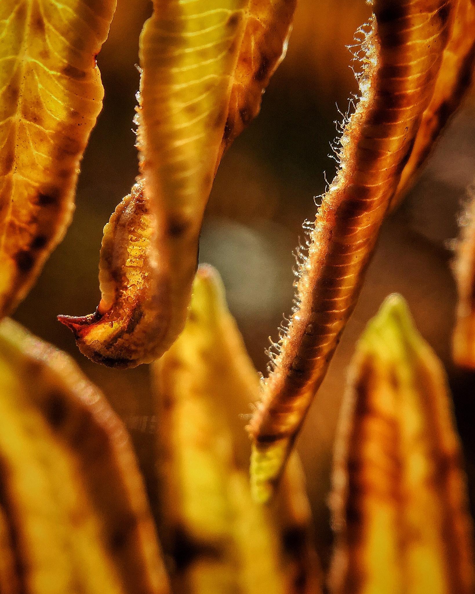 Macro fern tips by beaniedee