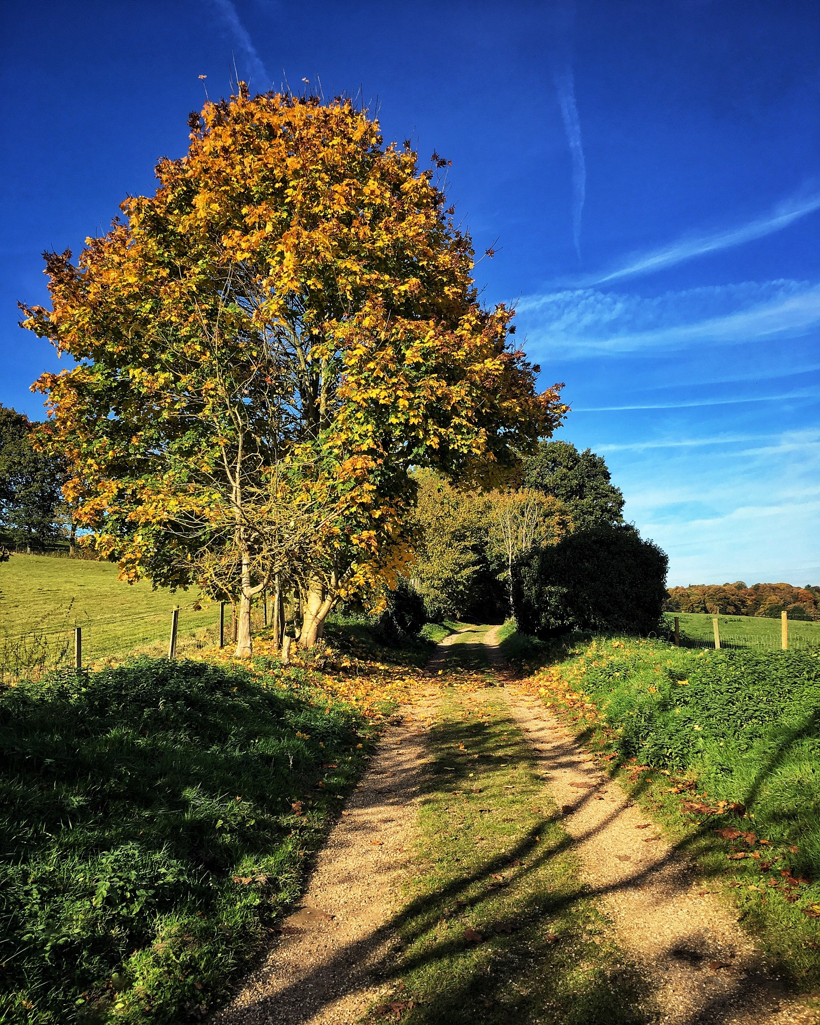Perfect autumn day in the Surrey countryside  by beaniedee